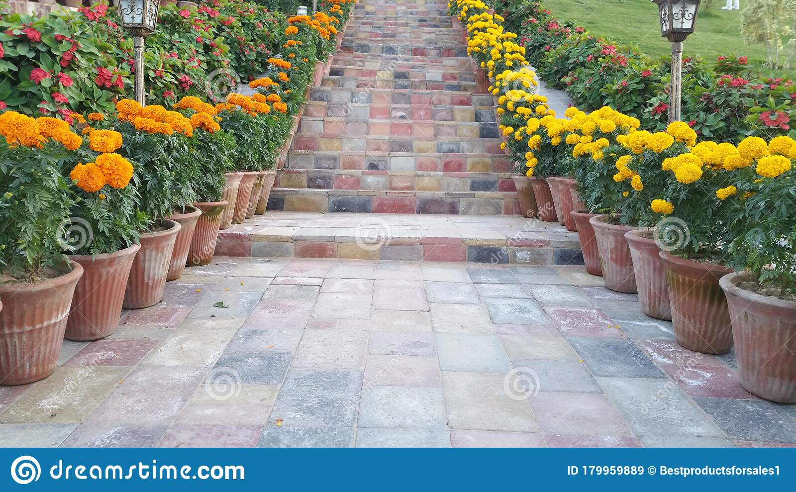 Decorated Stairs For Any Ceremony. Stock Image Of Stairs ...