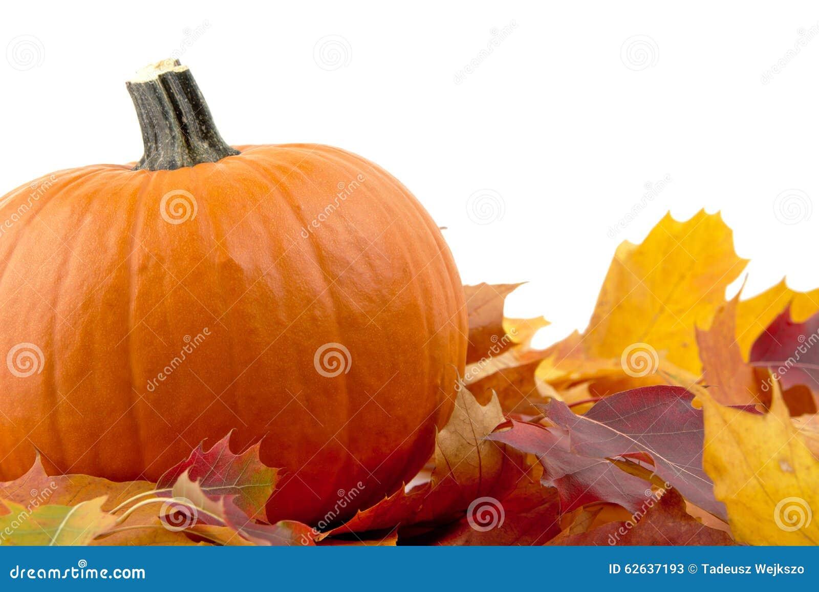 Decoratie van pompoen met de herfstbladeren voor thanksgiving day op wit stock foto afbeelding - Foto van decoratie ...