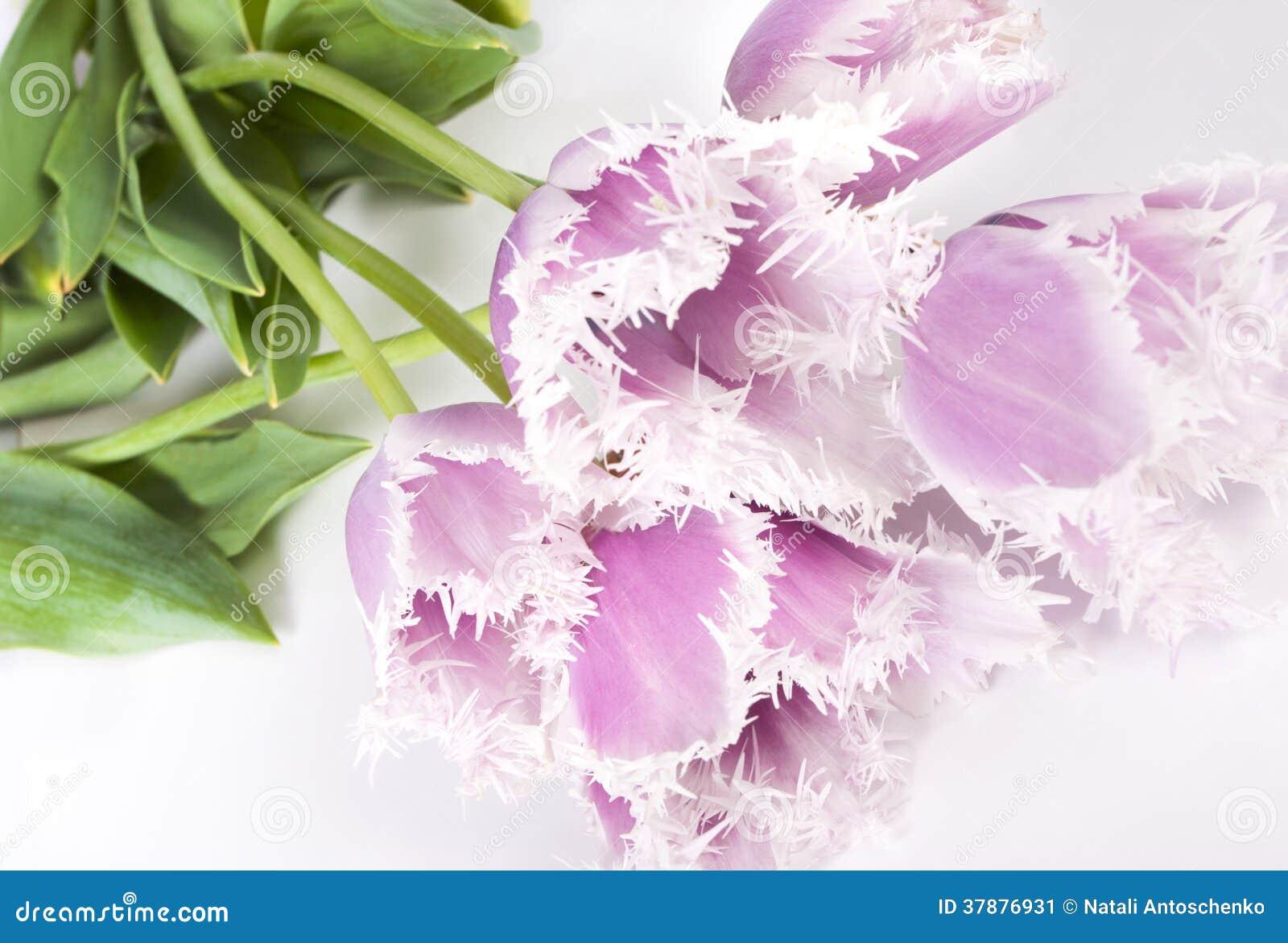 Decoratieve bloementulpen