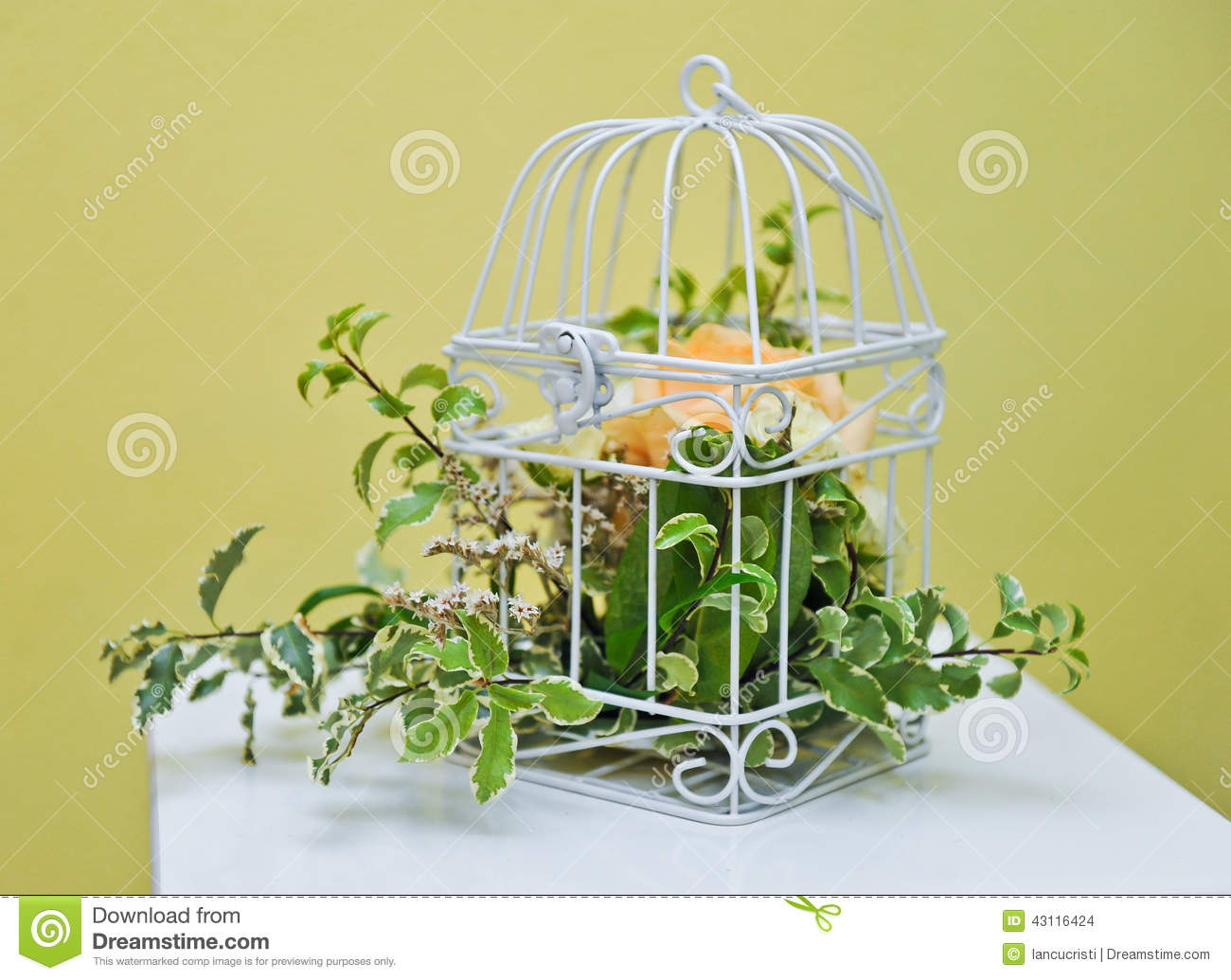 Decoration With Green Plant In A Bird Cage Stock Photo ...
