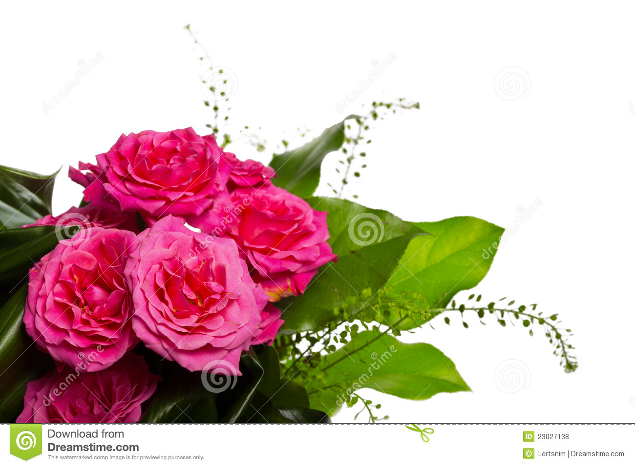 decoration for greeting card from the pink roses stock