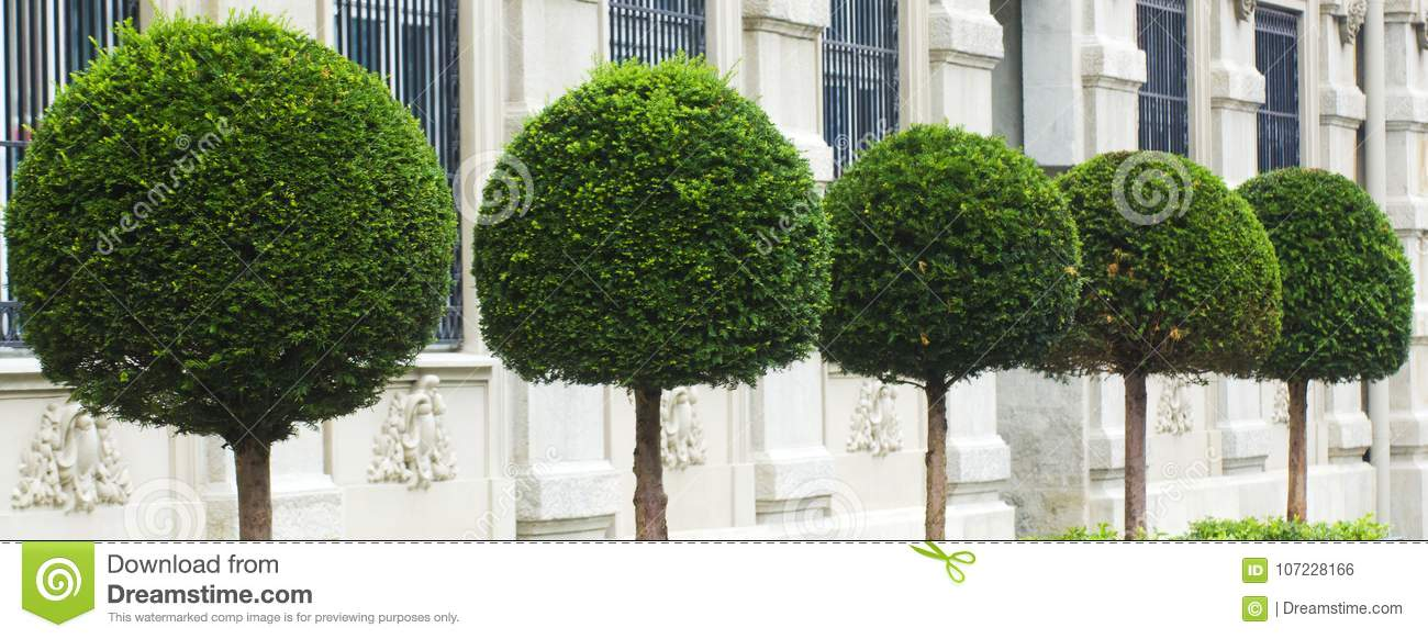 Decoration Plants Arranged In The Garden Stock Photo Image Of