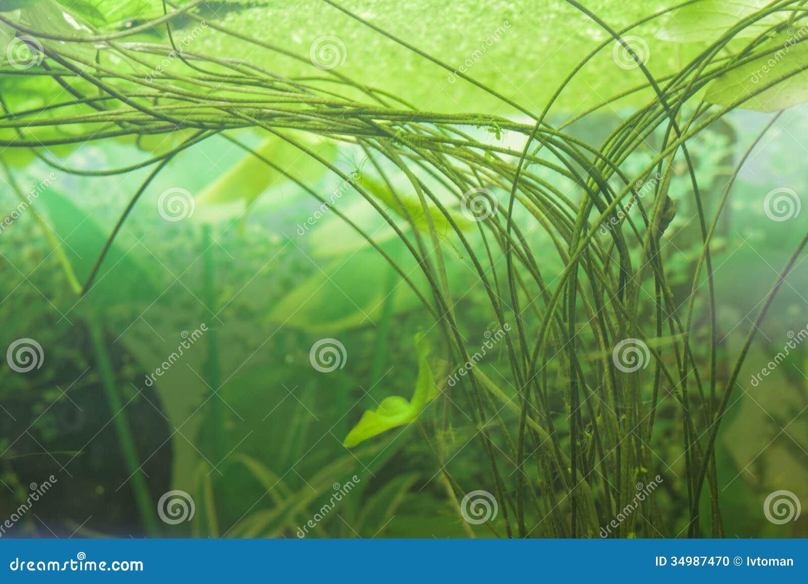 Decorative Aquarium Plants Stock Photo Image 34987470