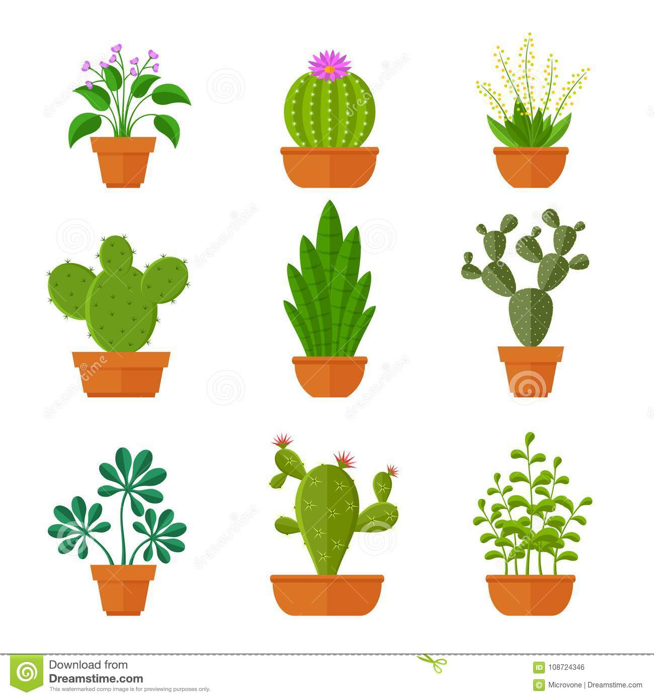 Cacti and succulents. Home Potted Flower 98