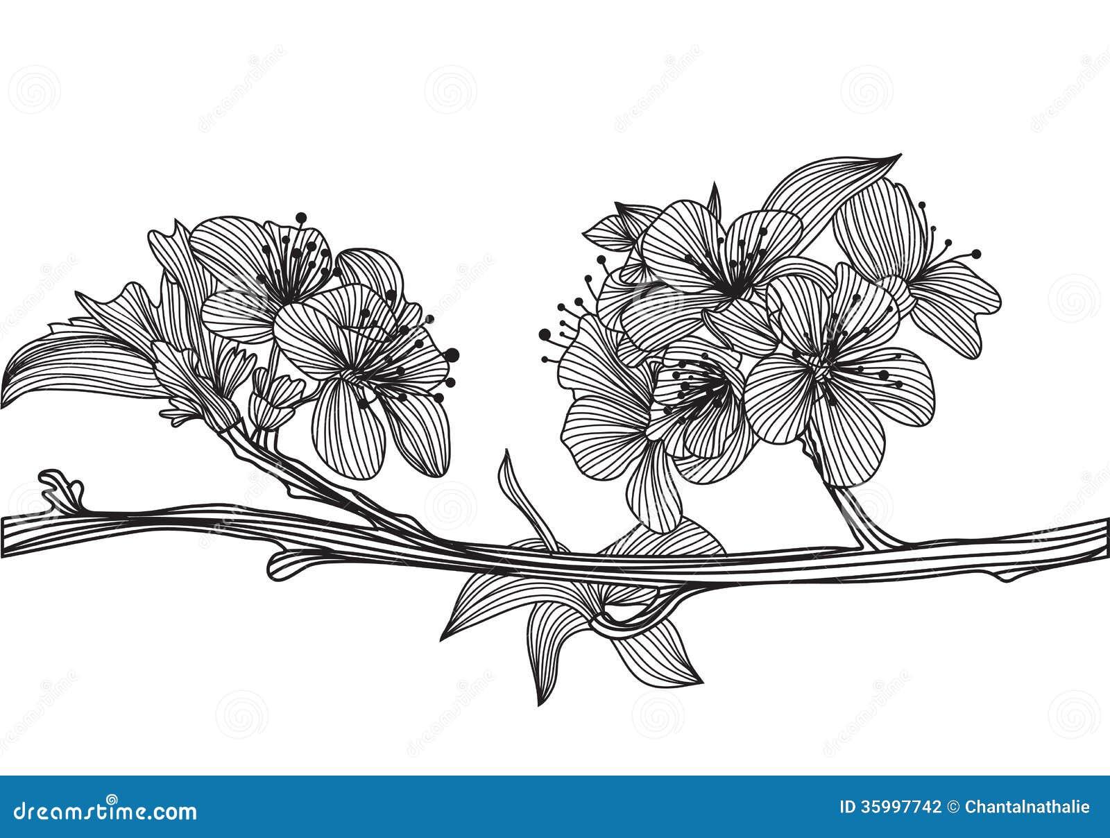 Decorative Cherry Blossom Stock Photography Image 35997742