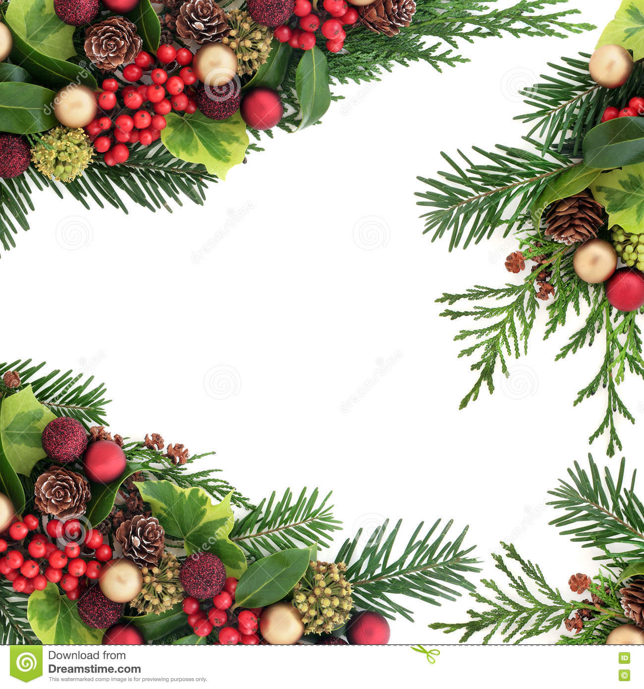 523c627dfa3c Decorative christmas border with red and gold bauble decorations, holly and  berries, ivy, pine cones, cedar cypress and fir leaf sprigs over white ...