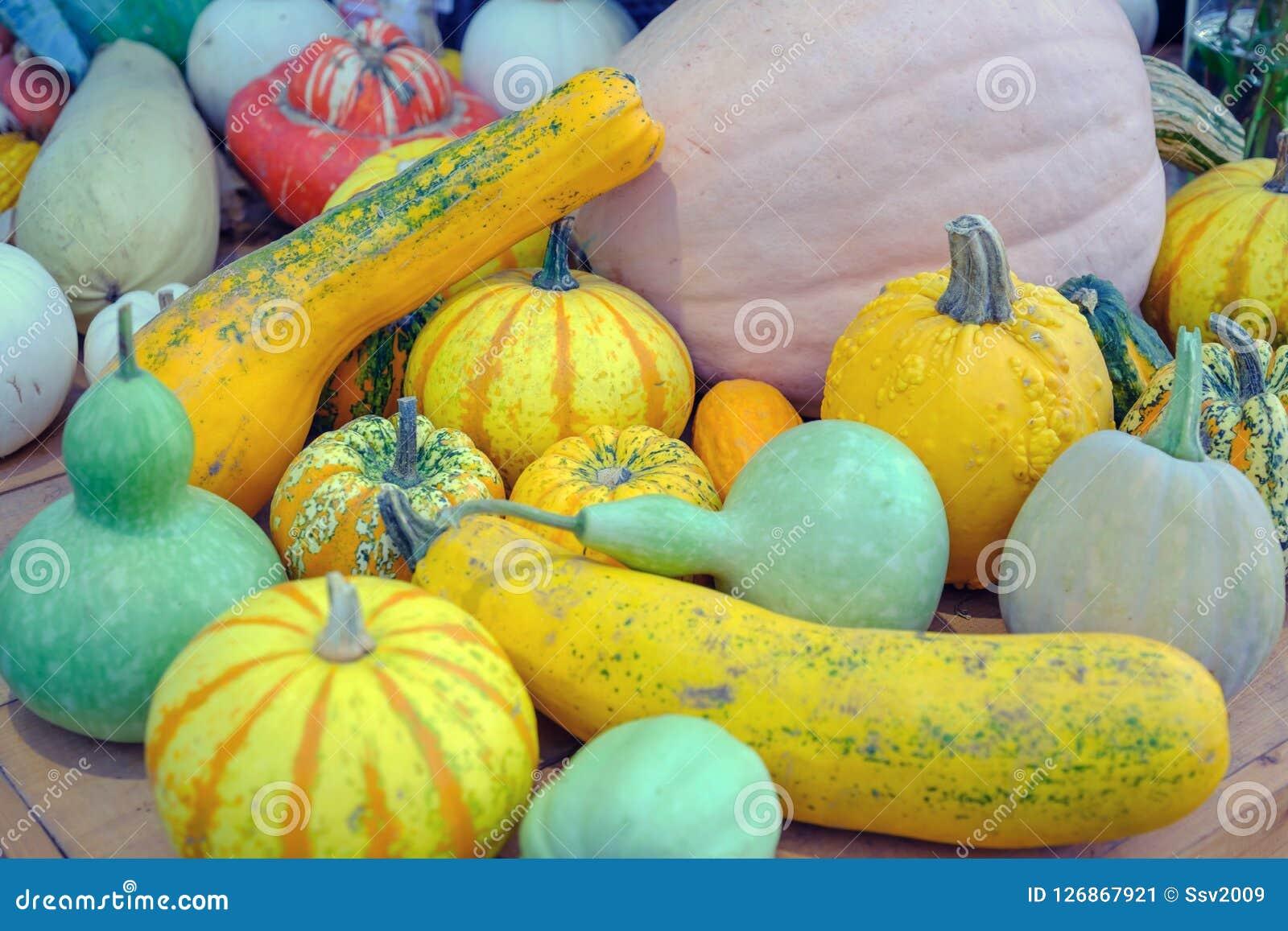 Decorative colorful pumpkins.