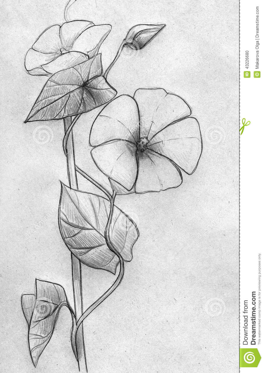 Hand drawn pencil sketch of a decorative creeping plant with two ...