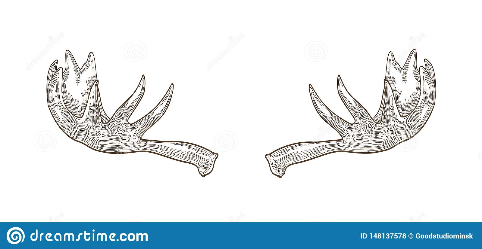 Decorative Drawing Of Elk Or Moose Palmate Antlers Trophy Or Haul