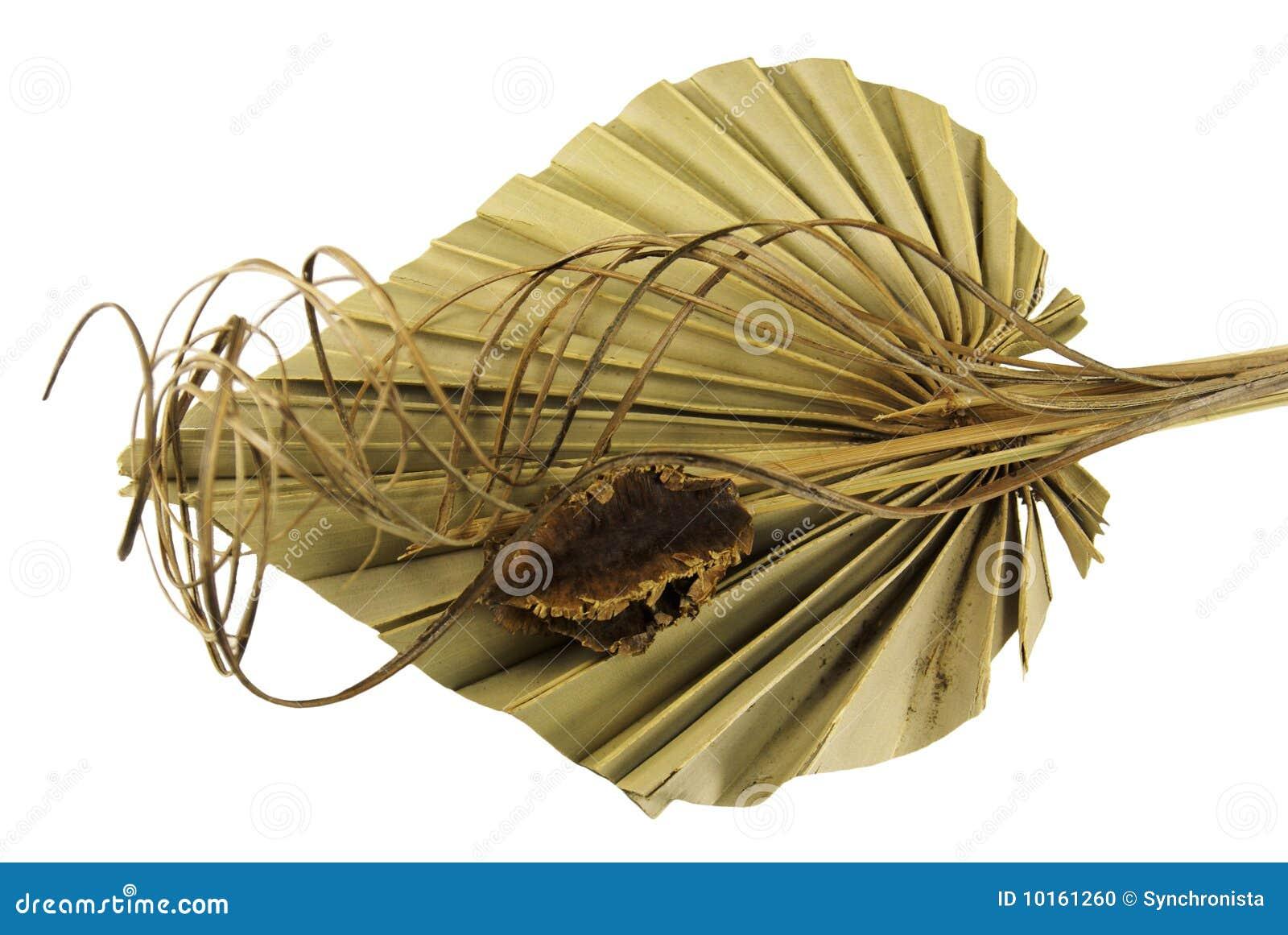 Decorative dried palm leaf