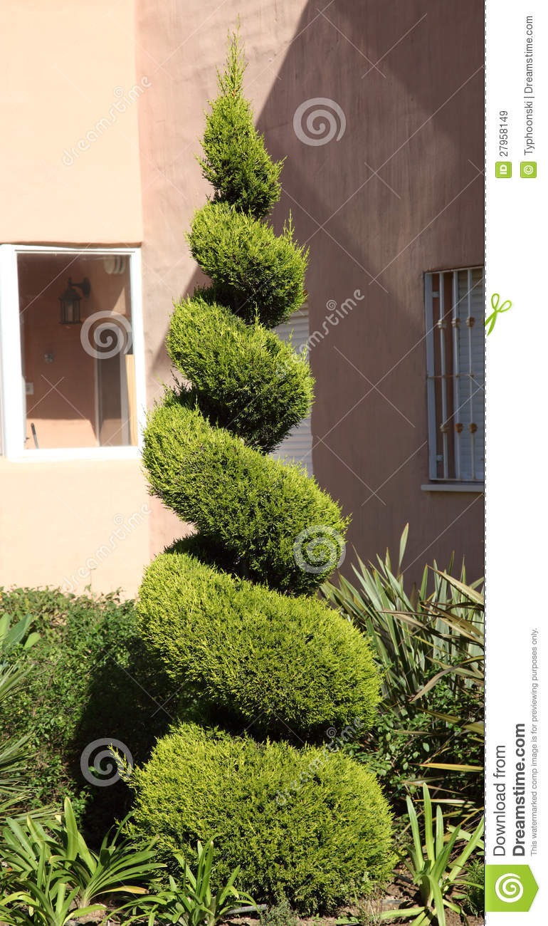 Decorative Fir Tree Stock Image Image Of Cone Gardening