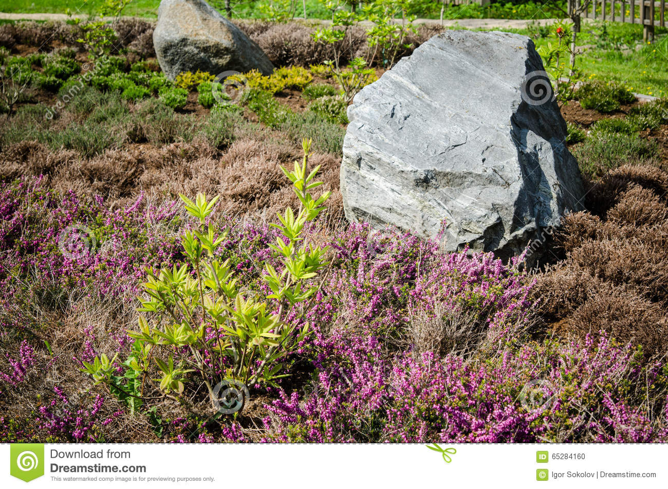 Download Decorative Flower Bed In A Garden With Rocks And Plants Stock  Photo   Image Of