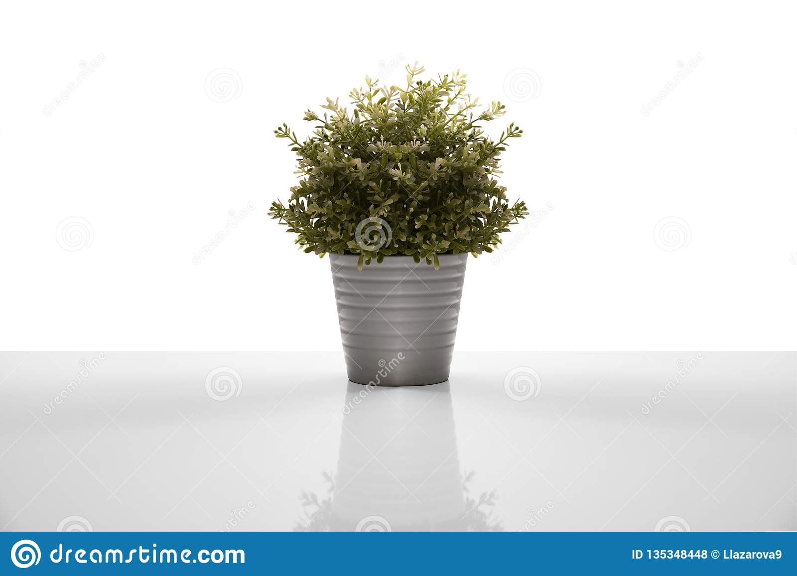 Decorative flower in flowerpot. Isolated on white background
