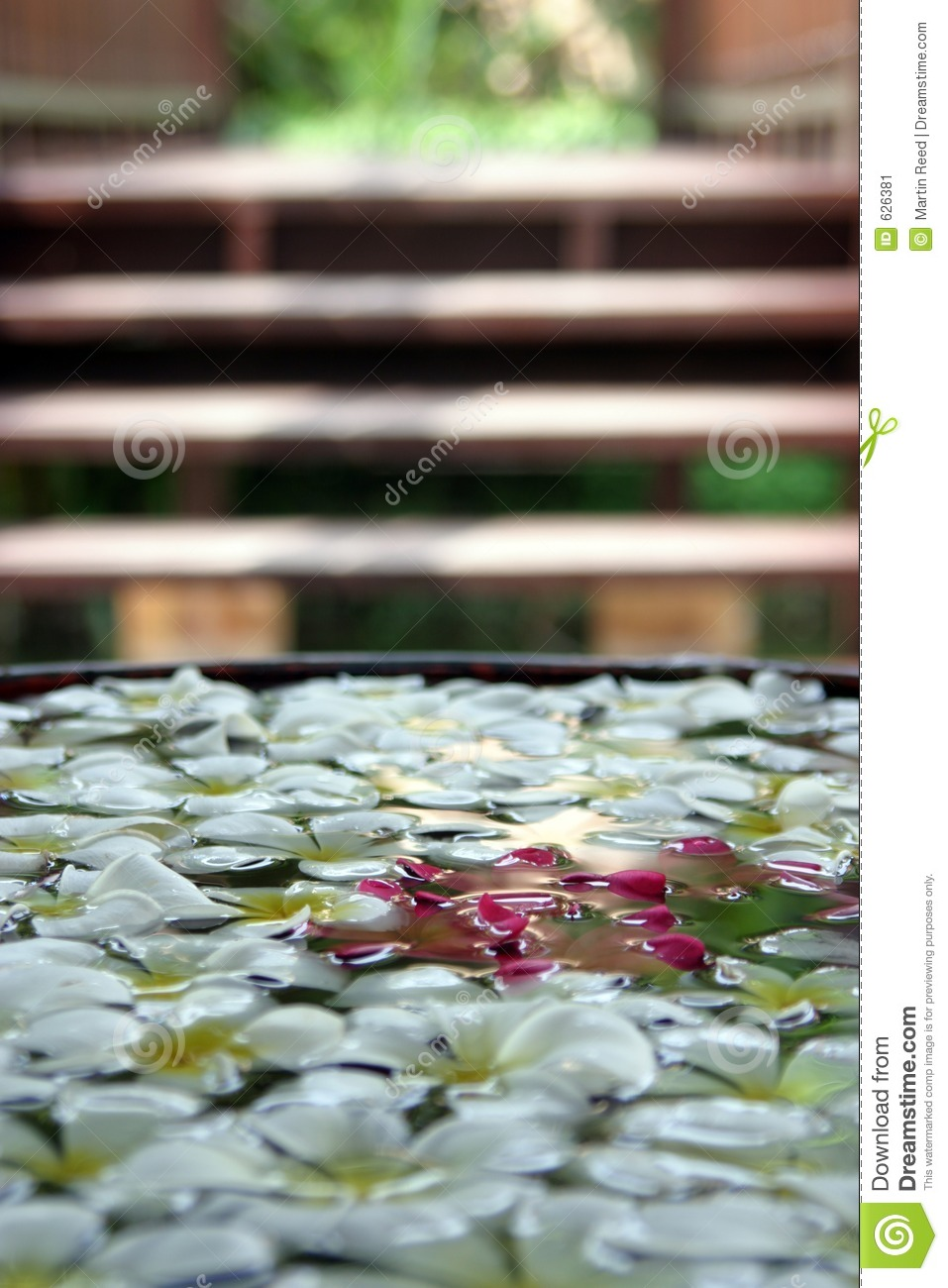 Decorative flowers floating in water stock image image for Floating flowers in water