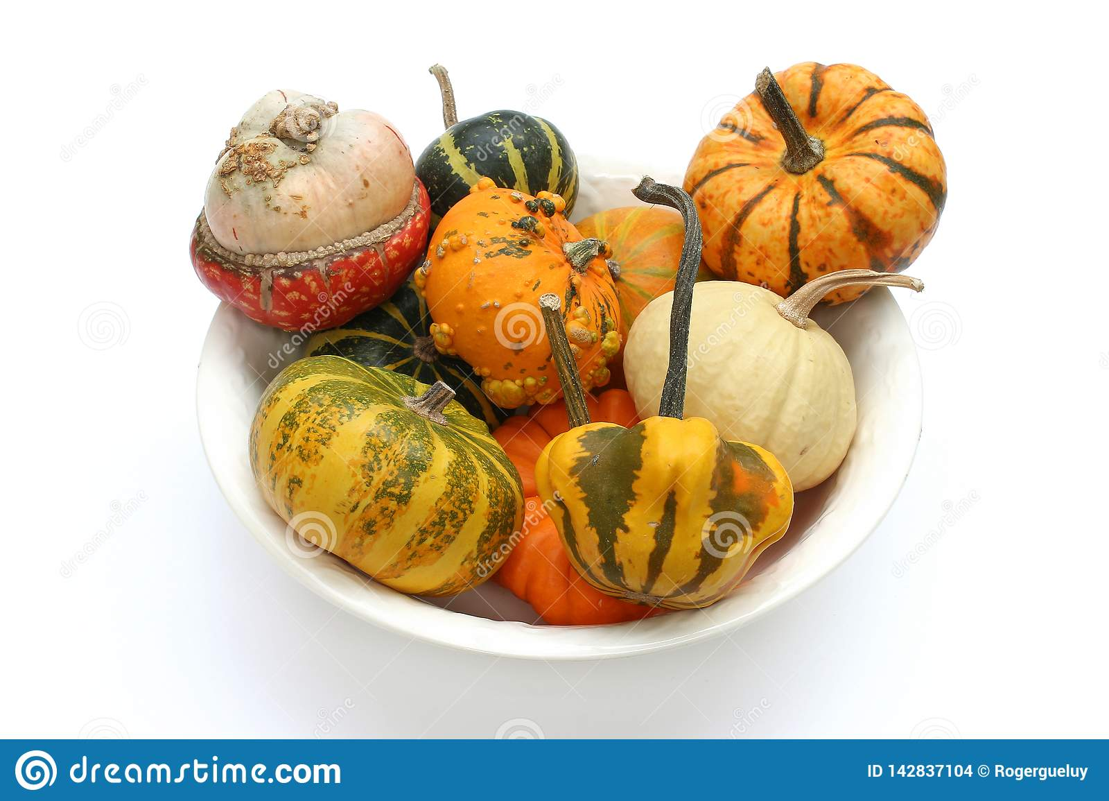 Colorful varieties of pumpkins, gourds and squashes on a white background