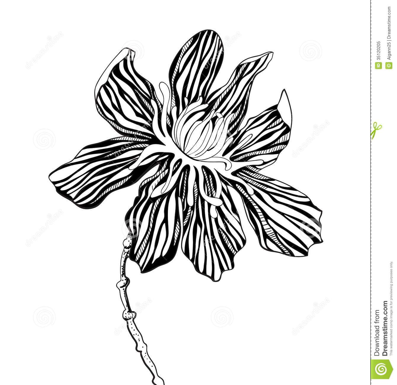 Decorative Graphic Flowers Stock Vector. Image Of Deco