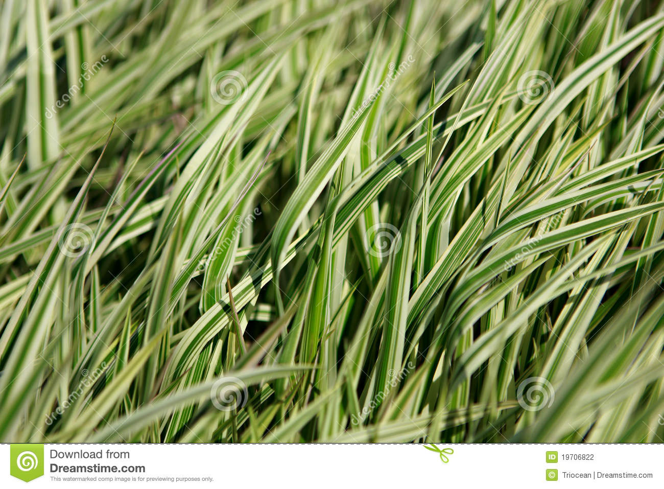 decorative grass stock photography image 19706822