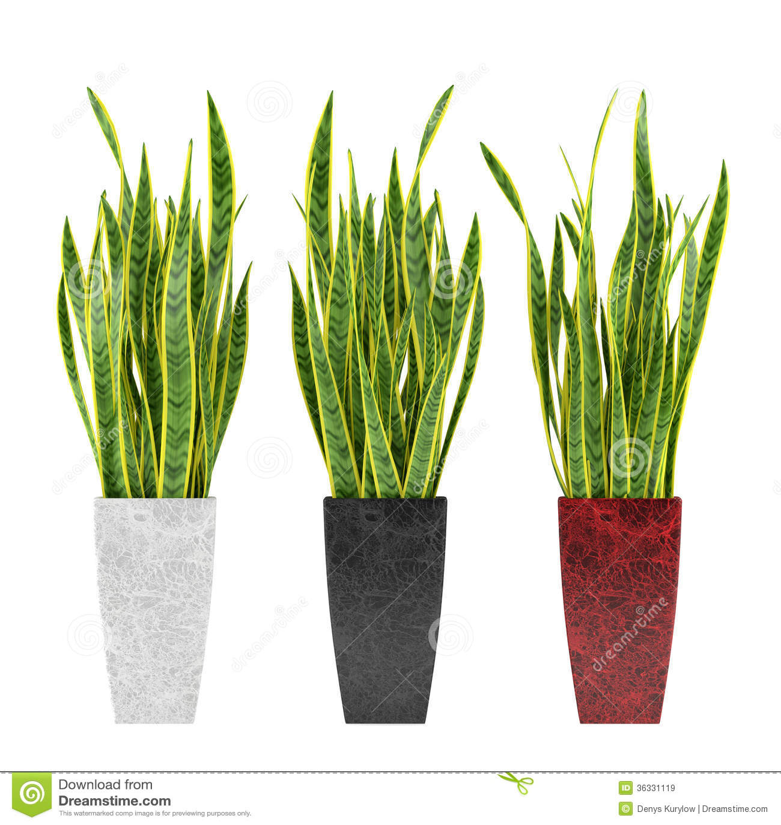 Decorative Grass Plant In Flowerpot Royalty Free Stock