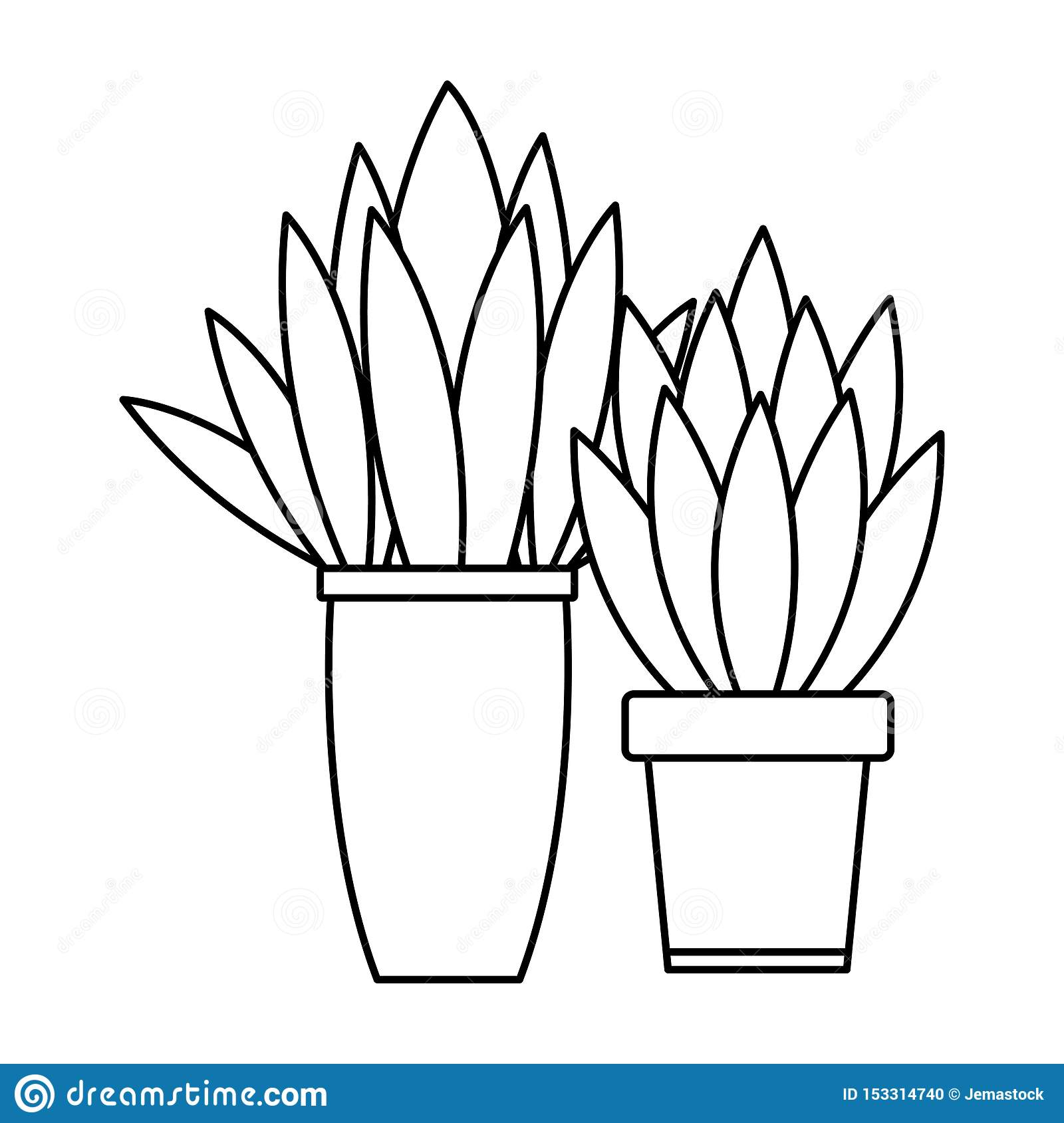 Decorative House Plant Pots Cartoon In Black And White Stock Vector Illustration Of Natural Floral 153314740