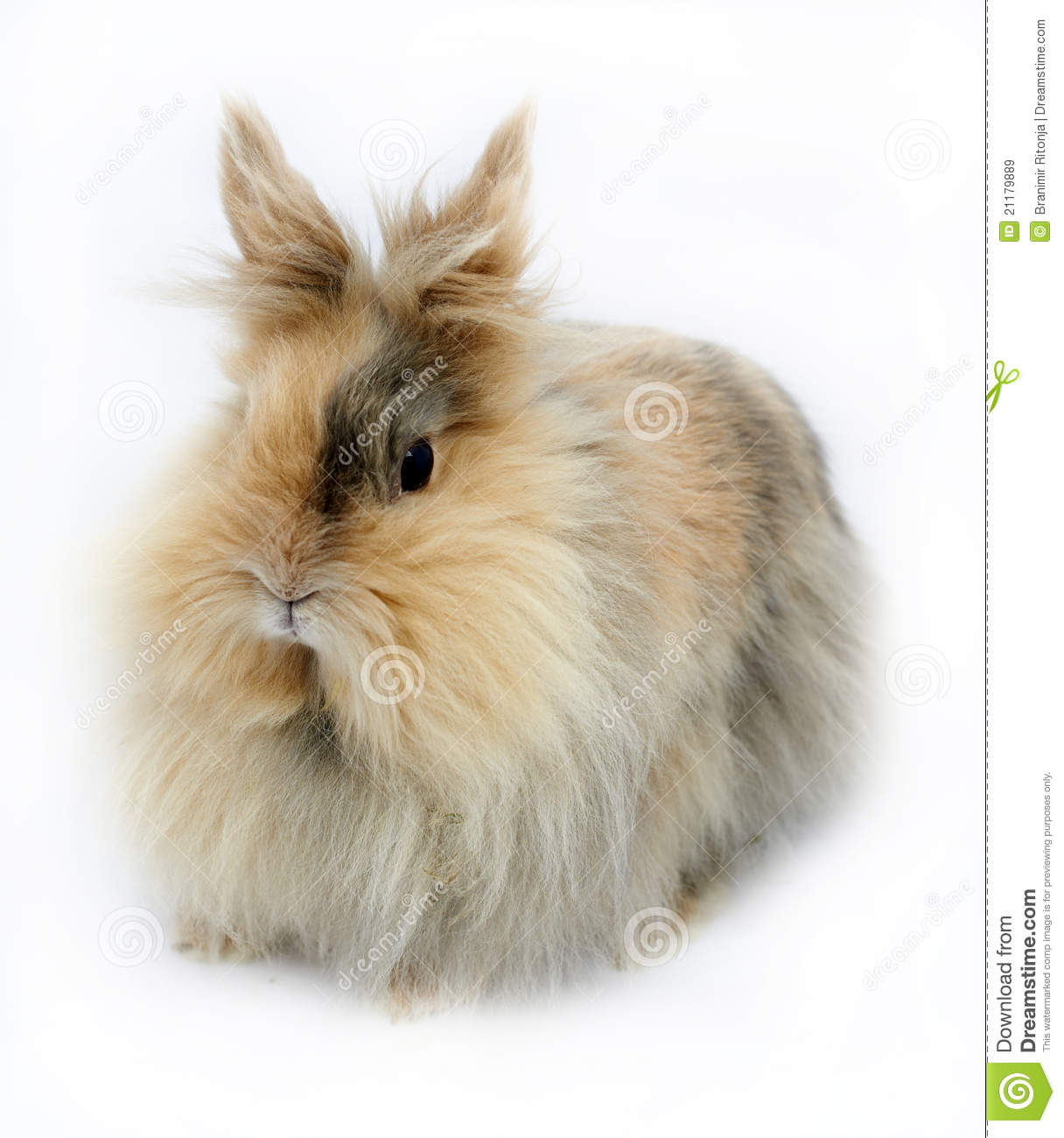 Decorative house rabbit