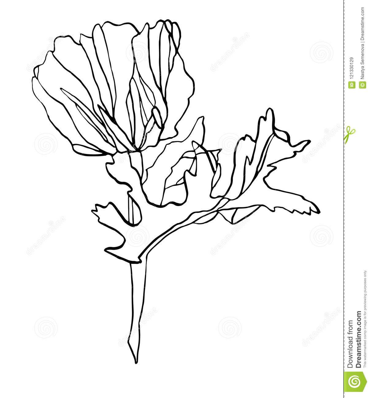 Decorative ink drawing poppy flower with leaves stock illustration decorative ink drawing poppy flower with leaves mightylinksfo