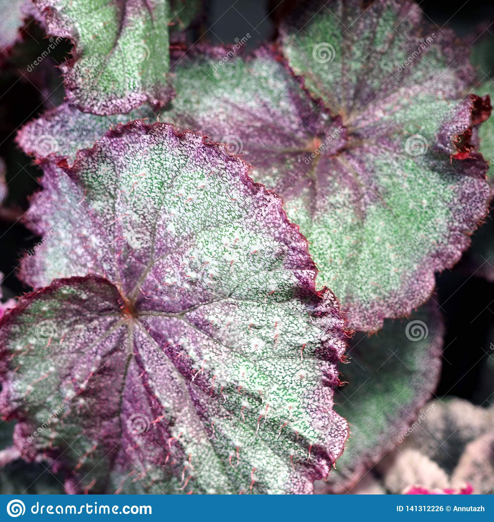 Decorative Leaves Of Houseplants Stock Photo - Image of ... on