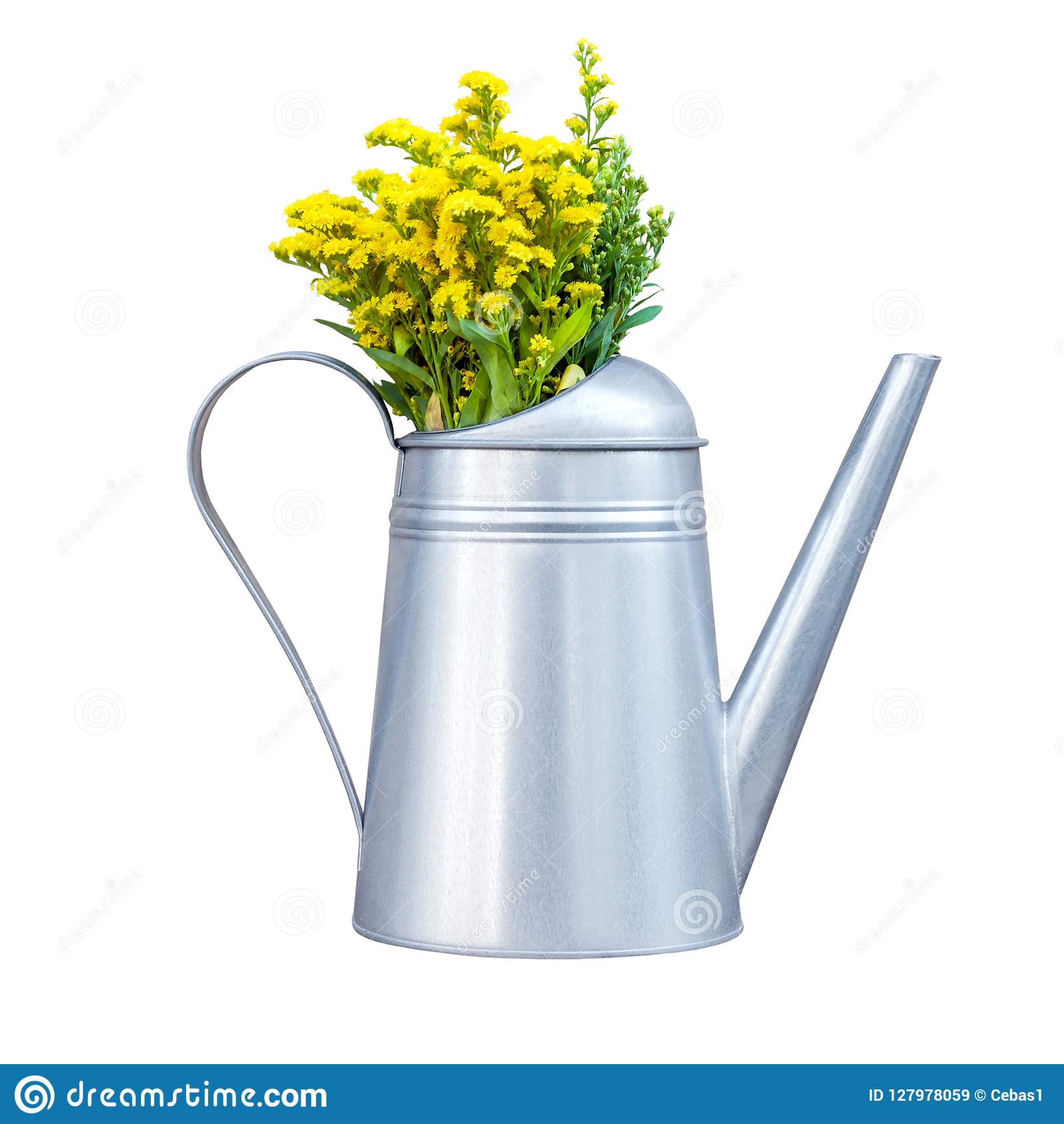 Decorative metal watering-can with yellow wildflowers isolated