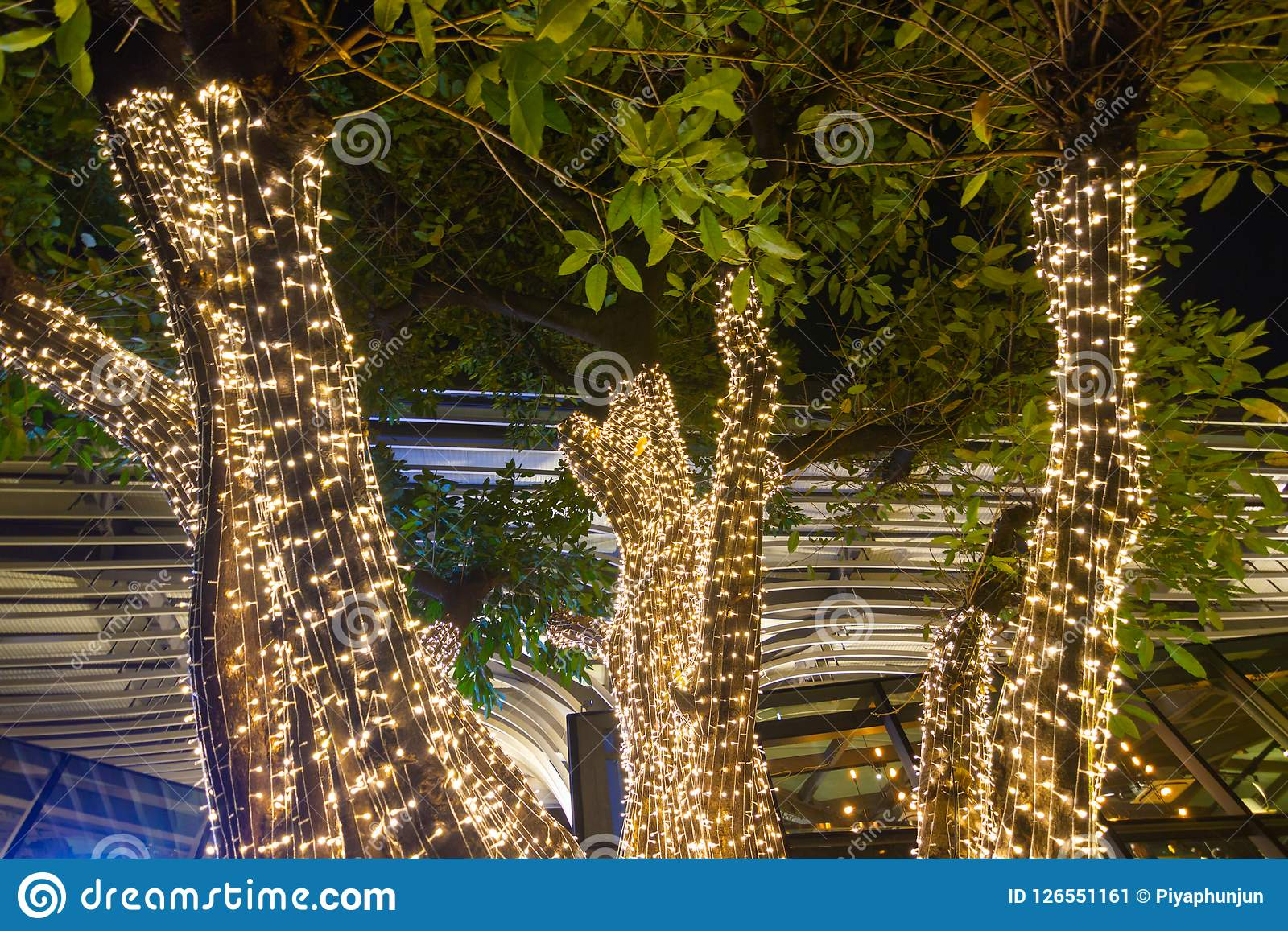 Decorative Outdoor String Lights Hanging On Tree In The Garden At ...