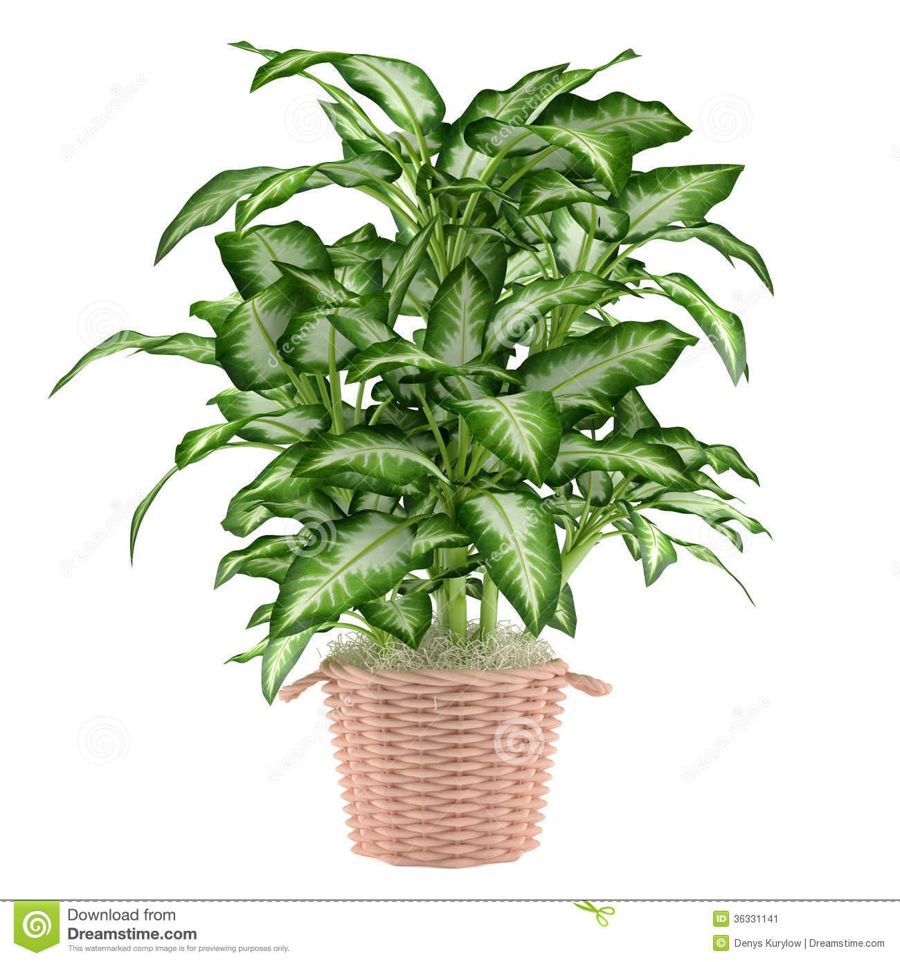 Decorative plant tree in the pot stock image image 36331141 for Decorative plants for garden