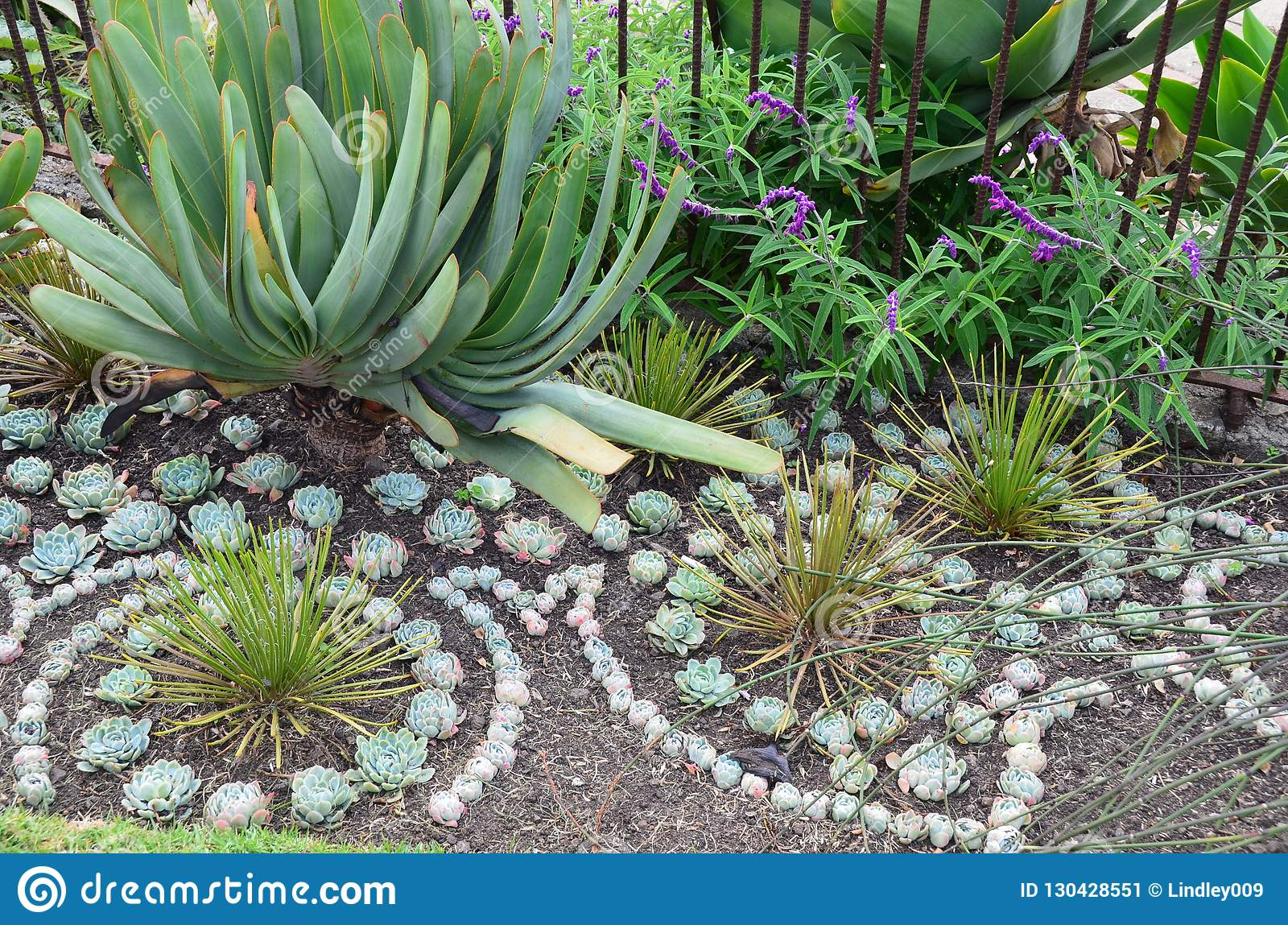Decorative Succulent Plantings In A Border At Esalen Stock ... on