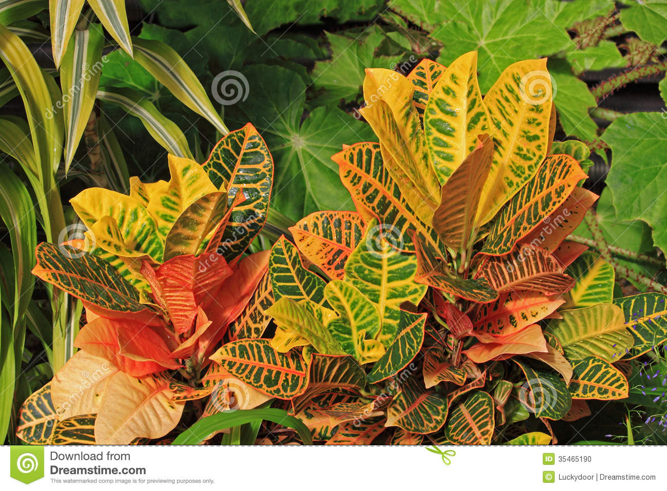 Decorative plants stock photo image 35465190 for Decorative plants for garden