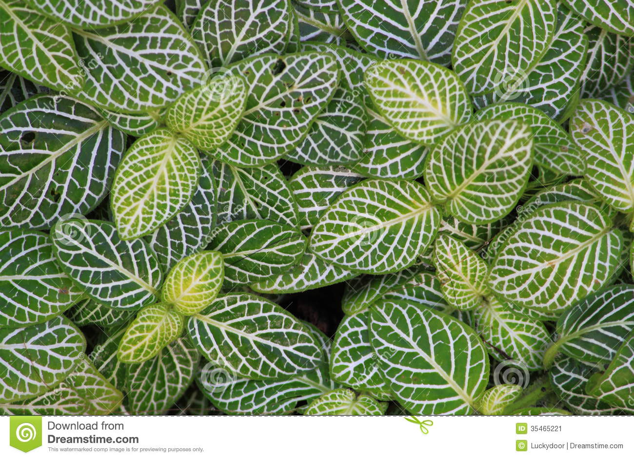 Decorative Plants stock image. Image of leaves, background - 35465221