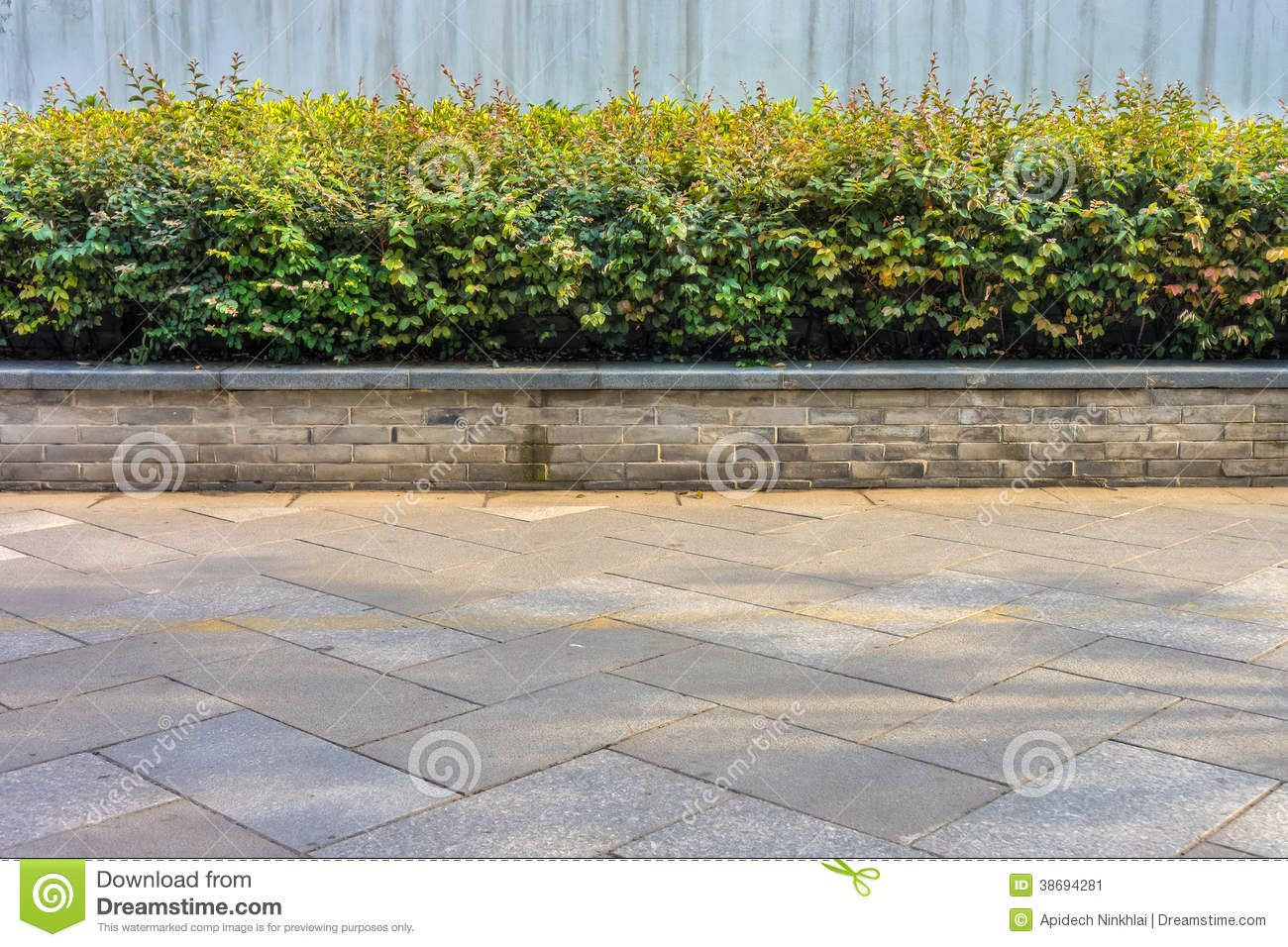 A decorative plants at sidewalk stock image image 38694281 for Garden city trees