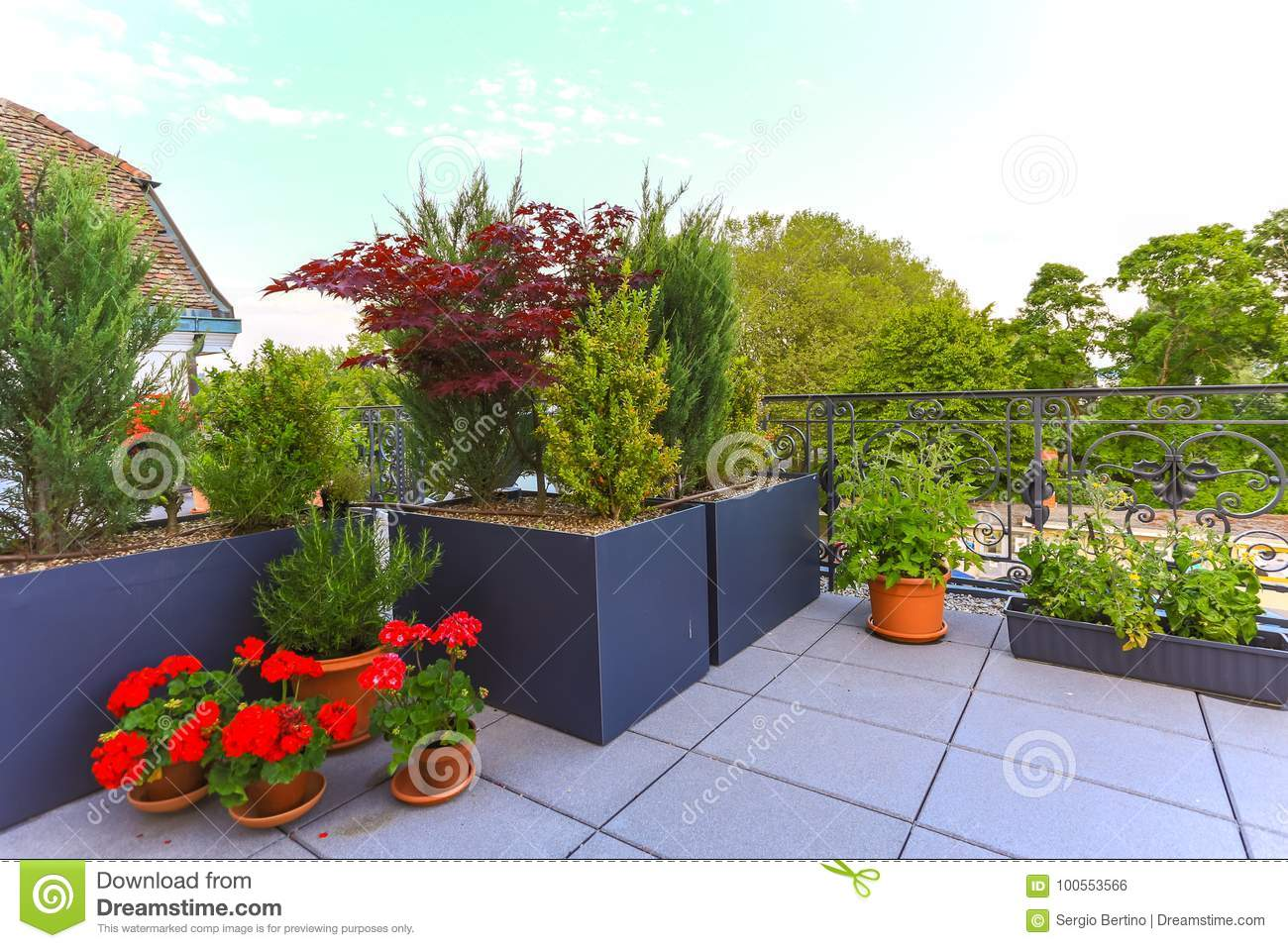 Decorative Potted Plants Growing On A Patio