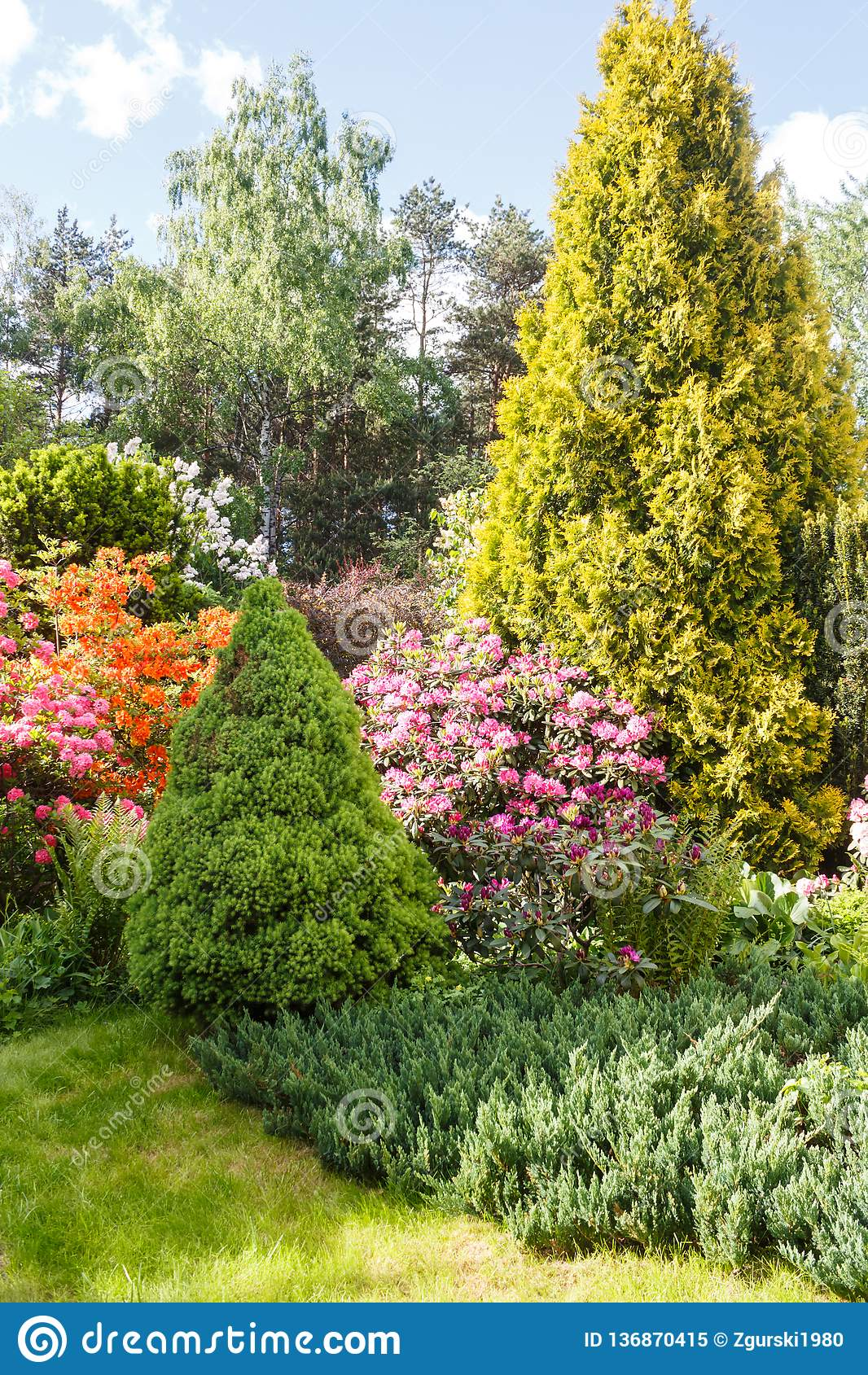 Decorative Trees Shrubs And Flowers In The Garden Spruce