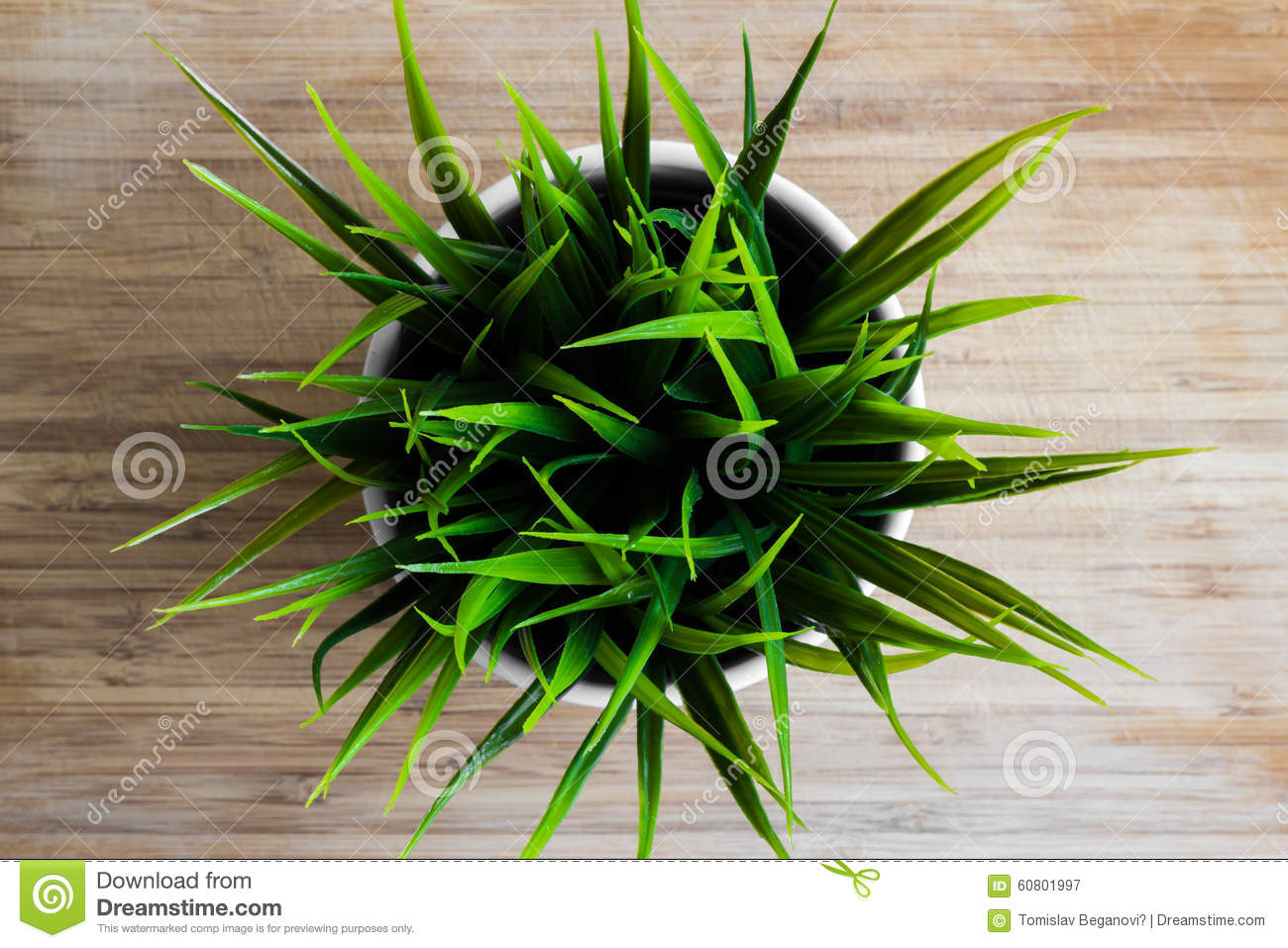 Decorative Wheatgrass Plant In White Flower Pot Top View Stock