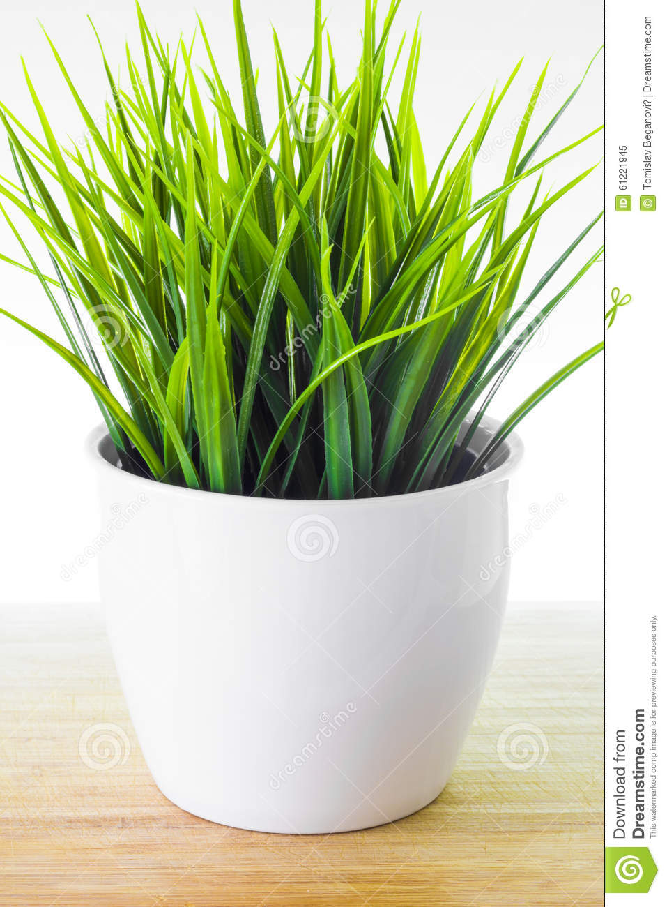Decorative wheatgrass plant in white flower pot stock image image decorative wheatgrass plant in white flower pot mightylinksfo