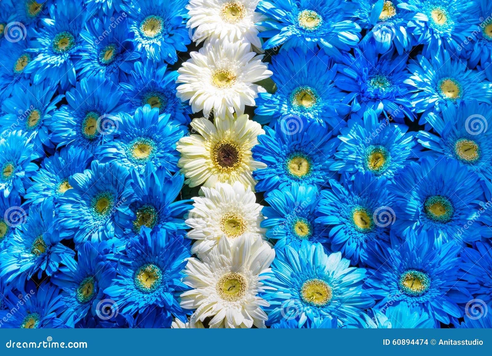 Fiori Blu E Bianchi.Decorazione Dei Fiori Blu E Bianchi Fotografia Stock Immagine Di