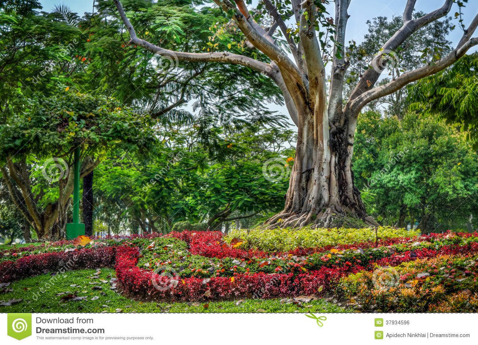 Decorazione del giardino con i fiori ed il grande albero for Albero con fiori blu
