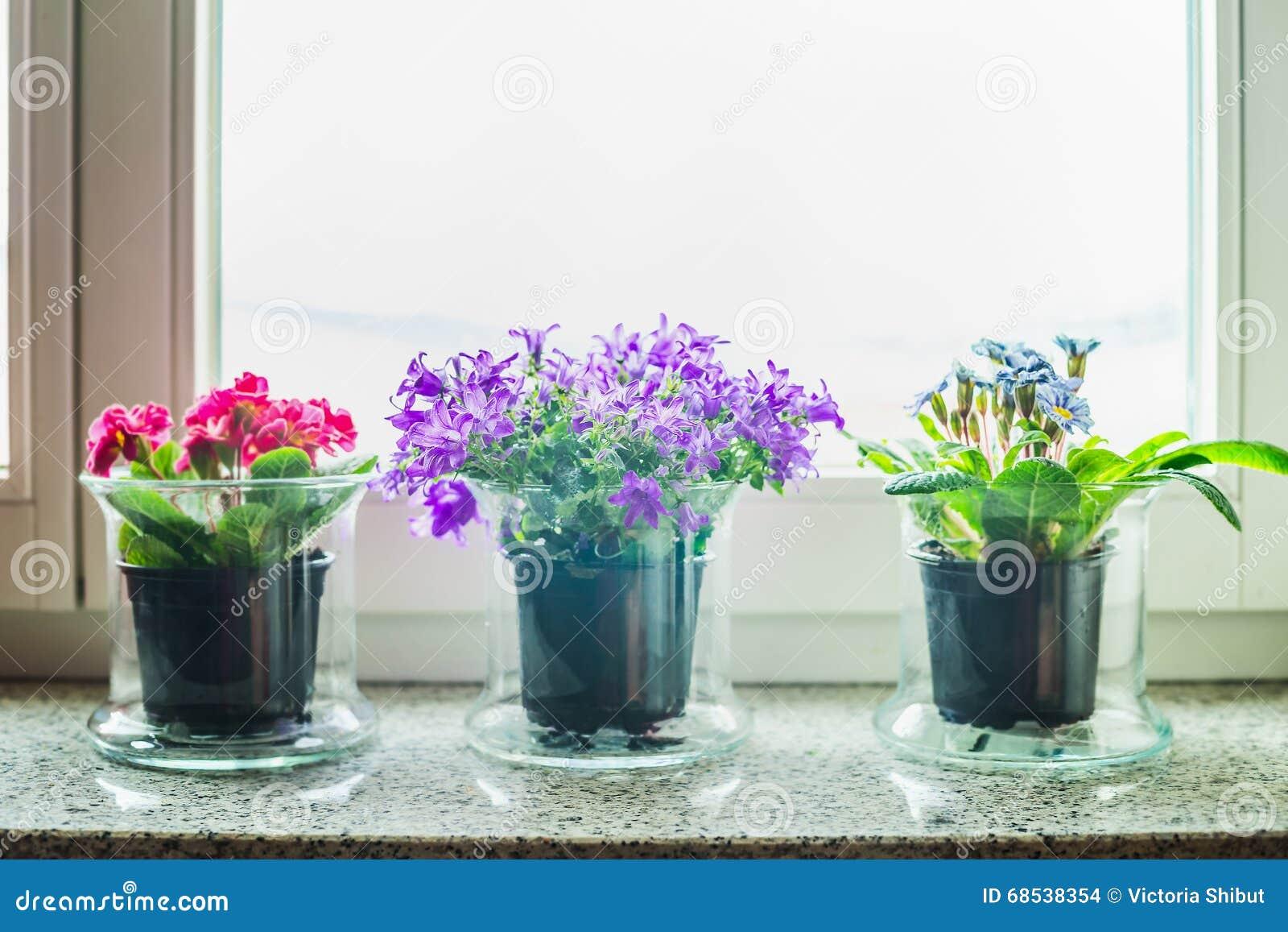 Decorazione Domestica Adorabile Con I Vasi Di Fiori Di