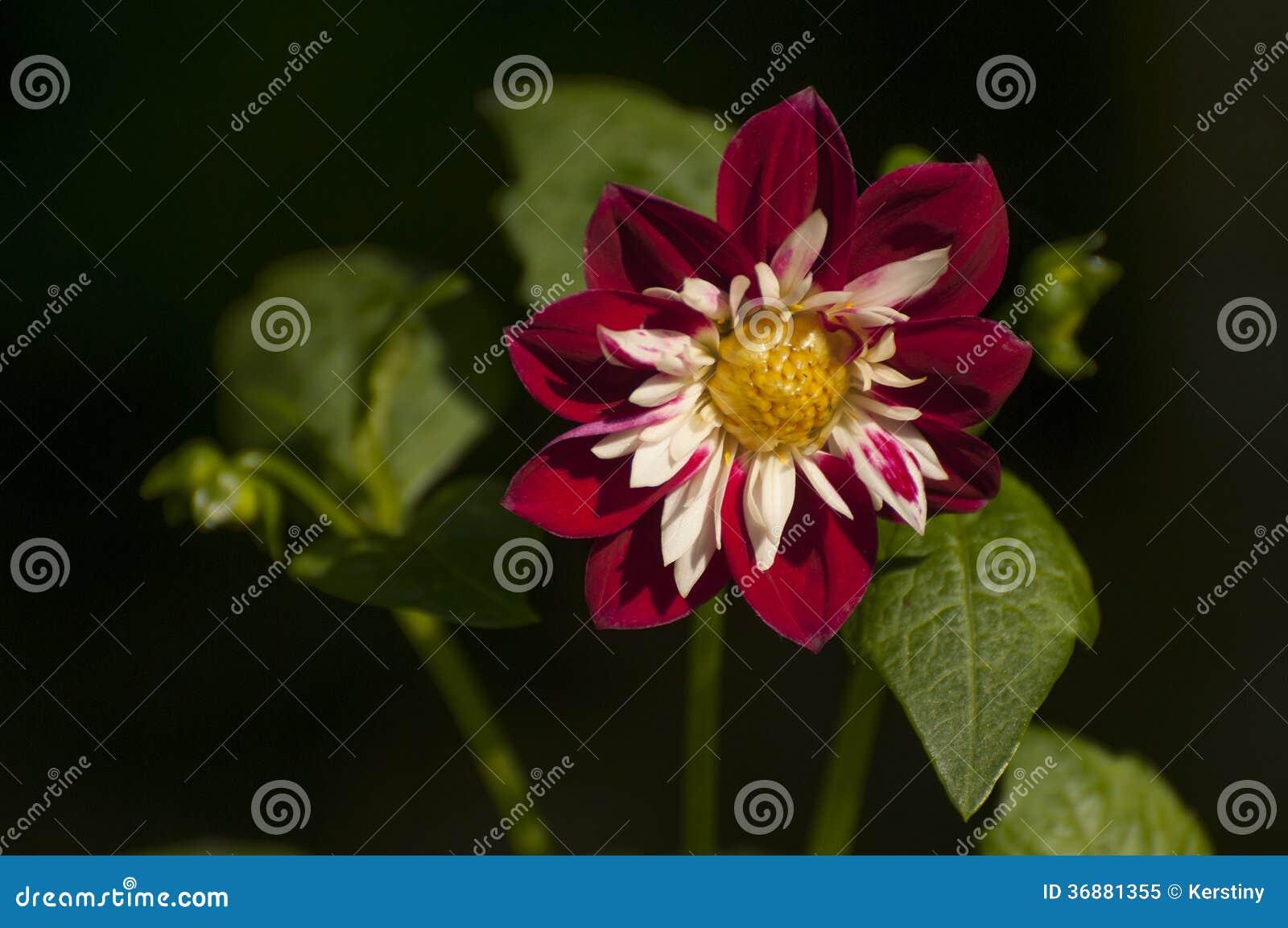 Download Decorazione floreale immagine stock. Immagine di stagione - 36881355