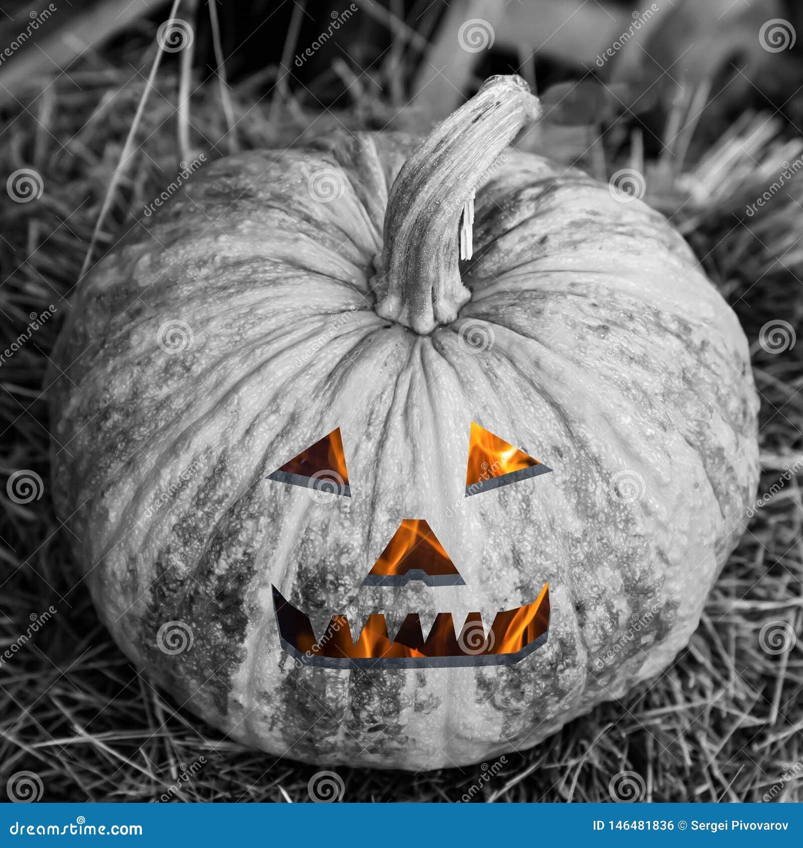 Decorazione terrorizzante Halloween della zucca di sorriso degli occhi della lanterna della testa diabolica ardente monocromatica