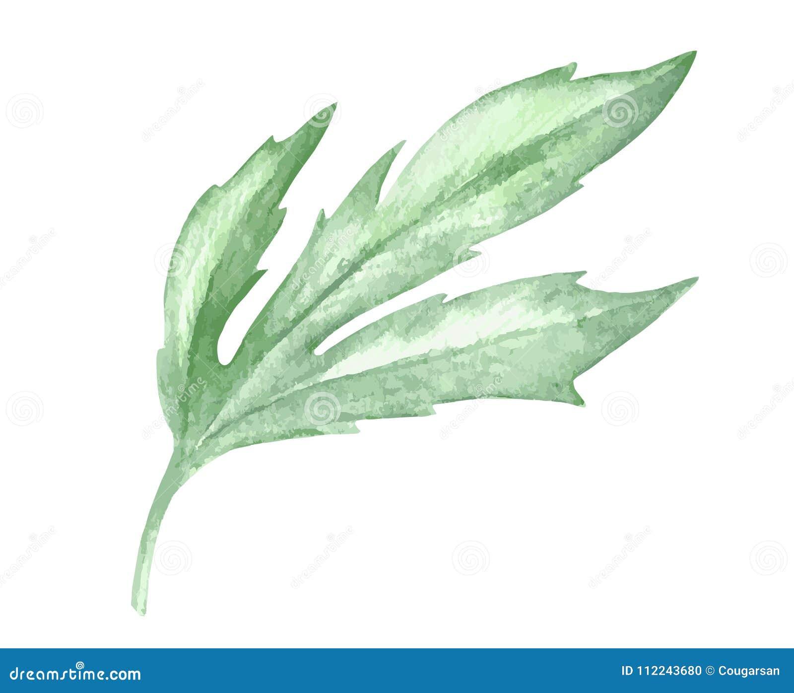 Decorazione verde della pianta della foglia dell acquerello su fondo bianco