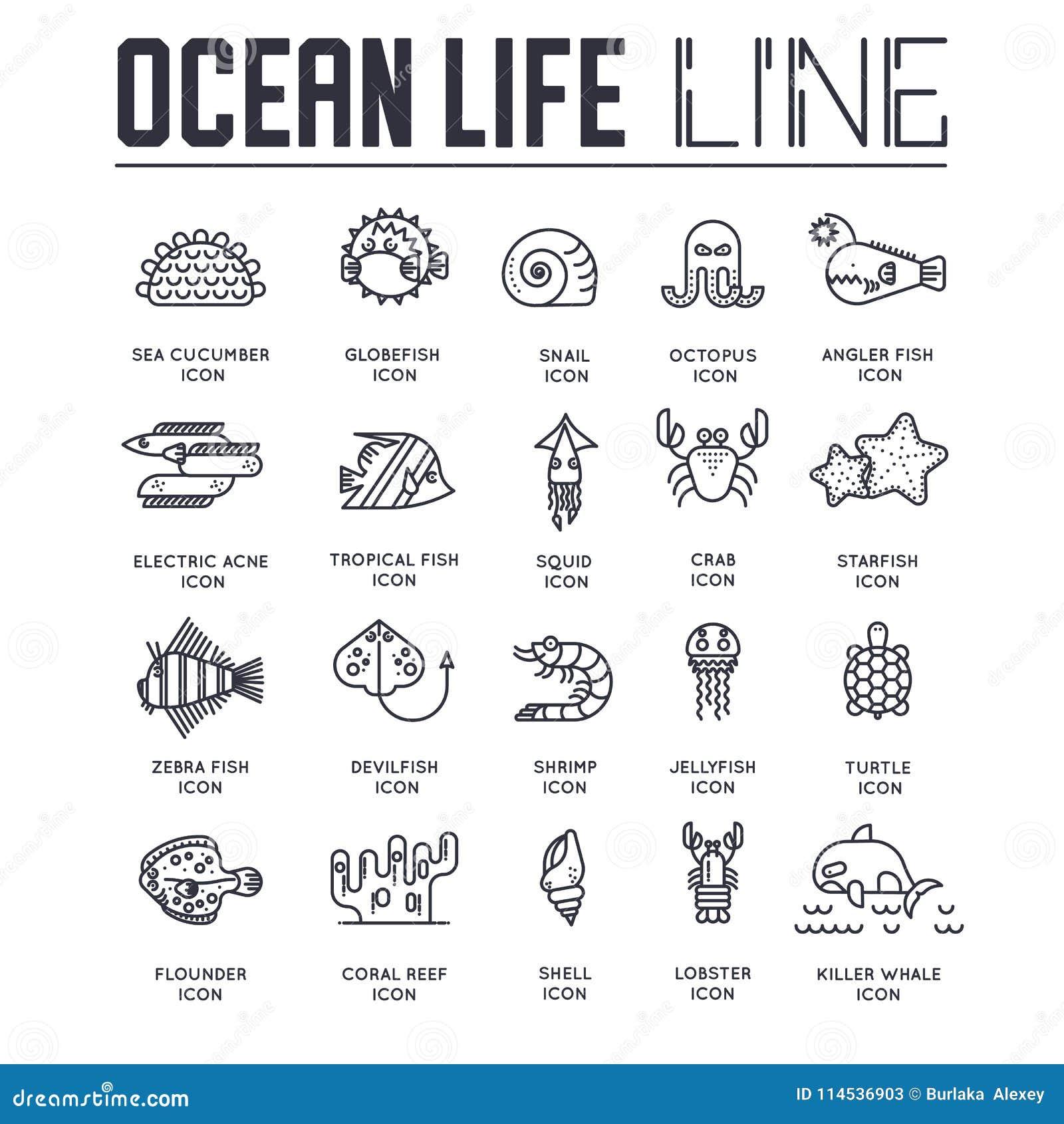 dedicated to undersea vector brochure lines set coral reef in the