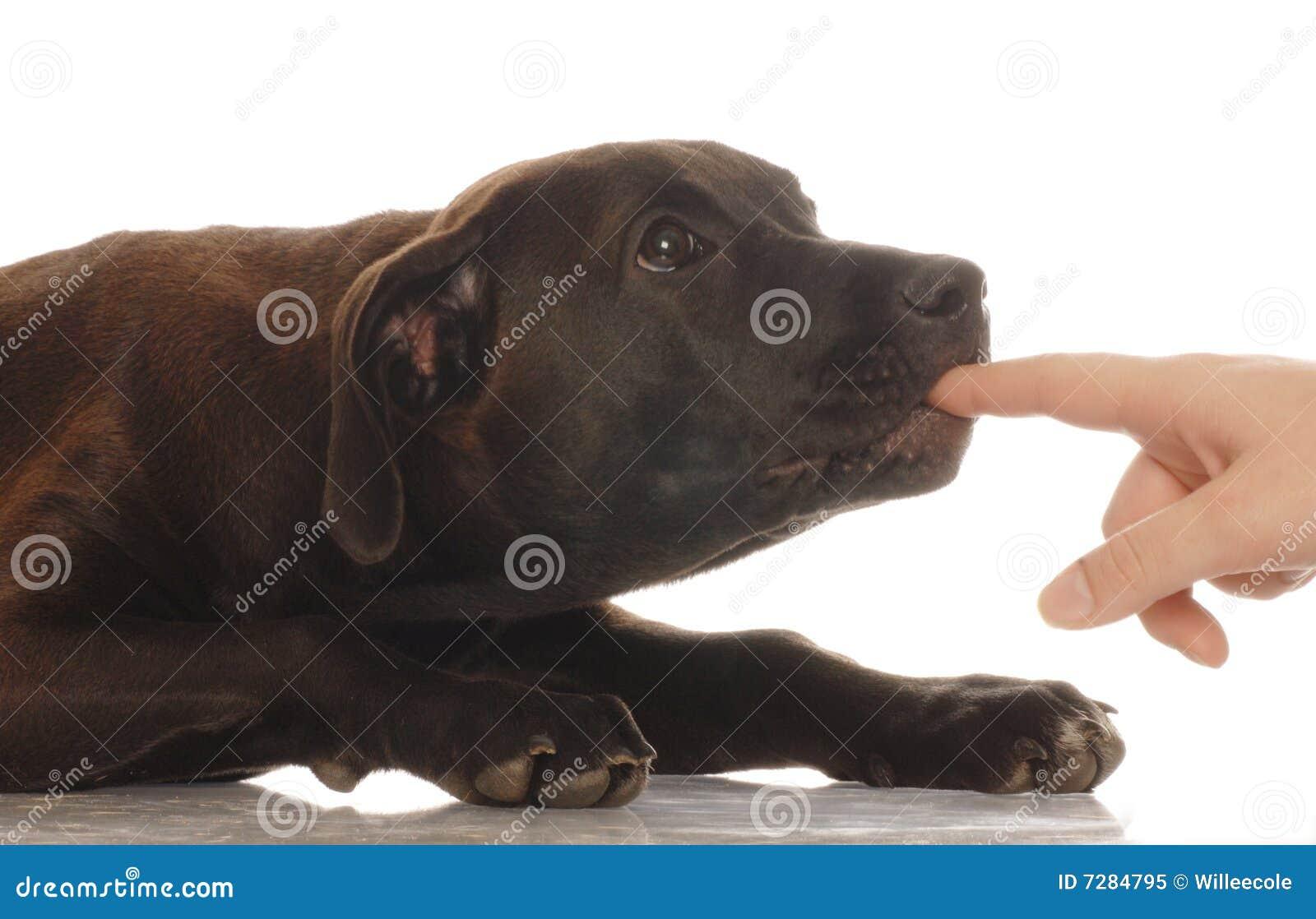 Dedo penetrante del perrito