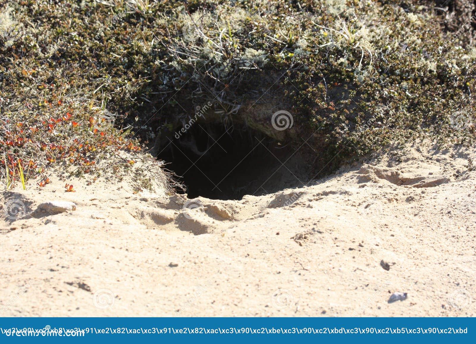 Animal hole on the sandy shore.