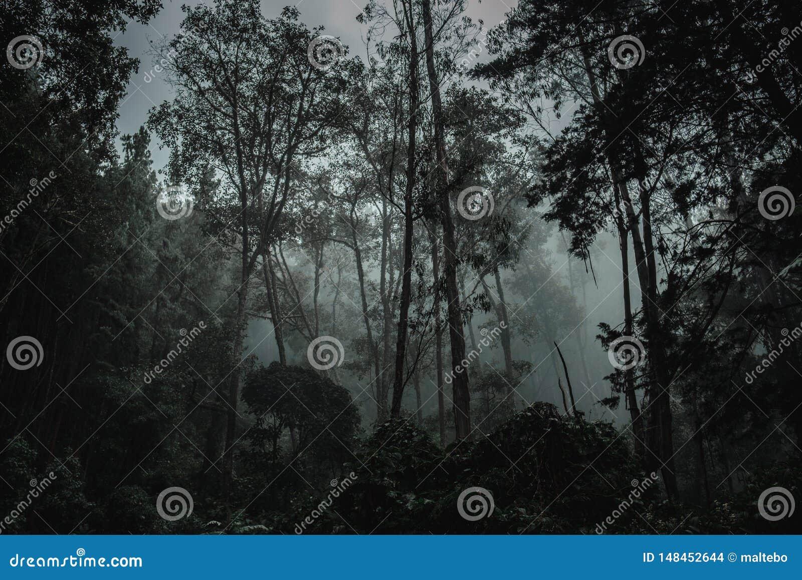 Deep in the dark amazon jungle