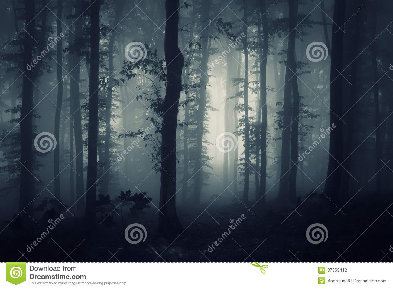 Deep dark woods with creepy fog