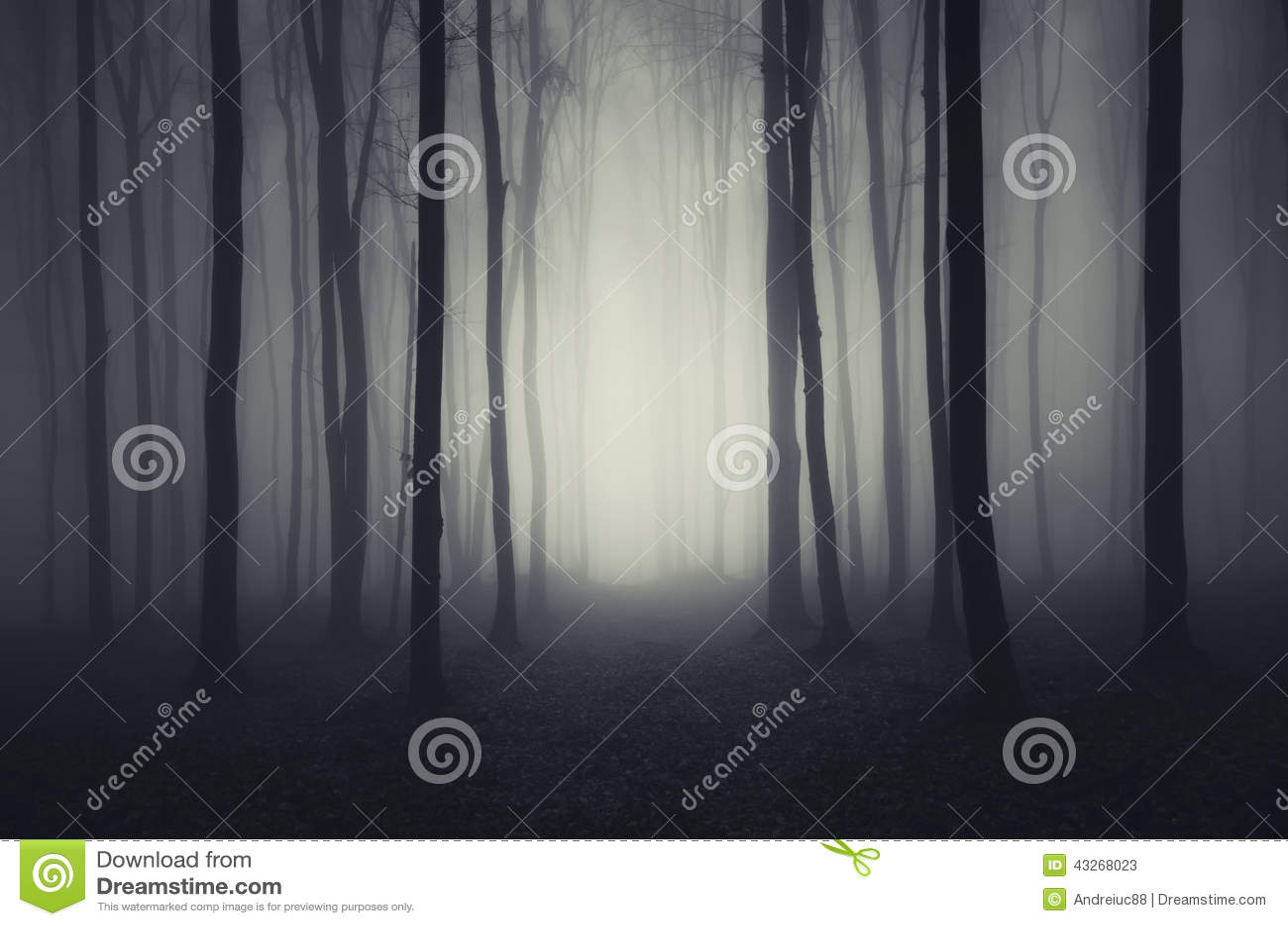 Deep dark woods on Halloween night