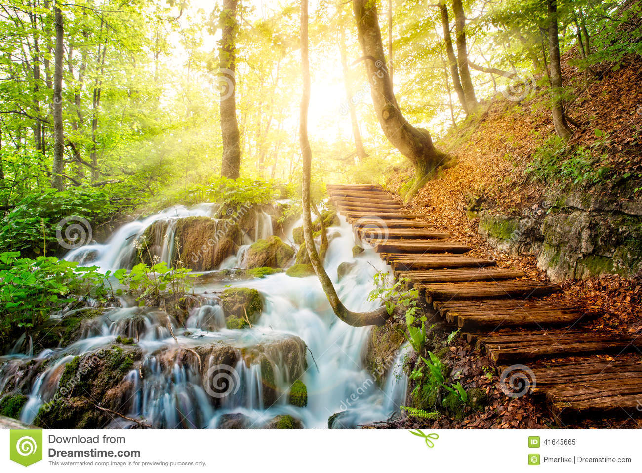 Download Deep Forest Stream With Crystal Clear Water In The Sunshine Stock Image - Image of path, crystal: 41645665